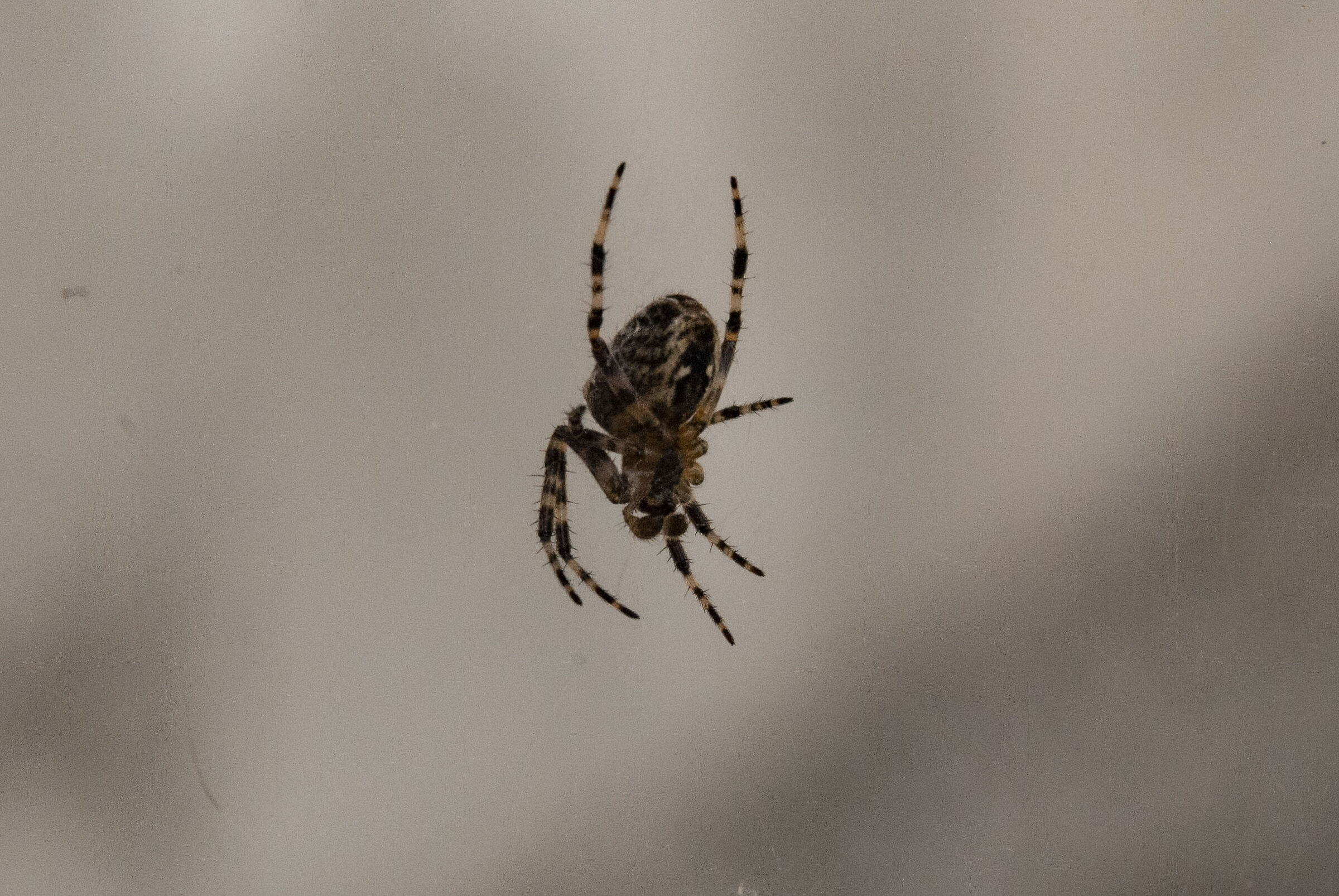Spider 2...