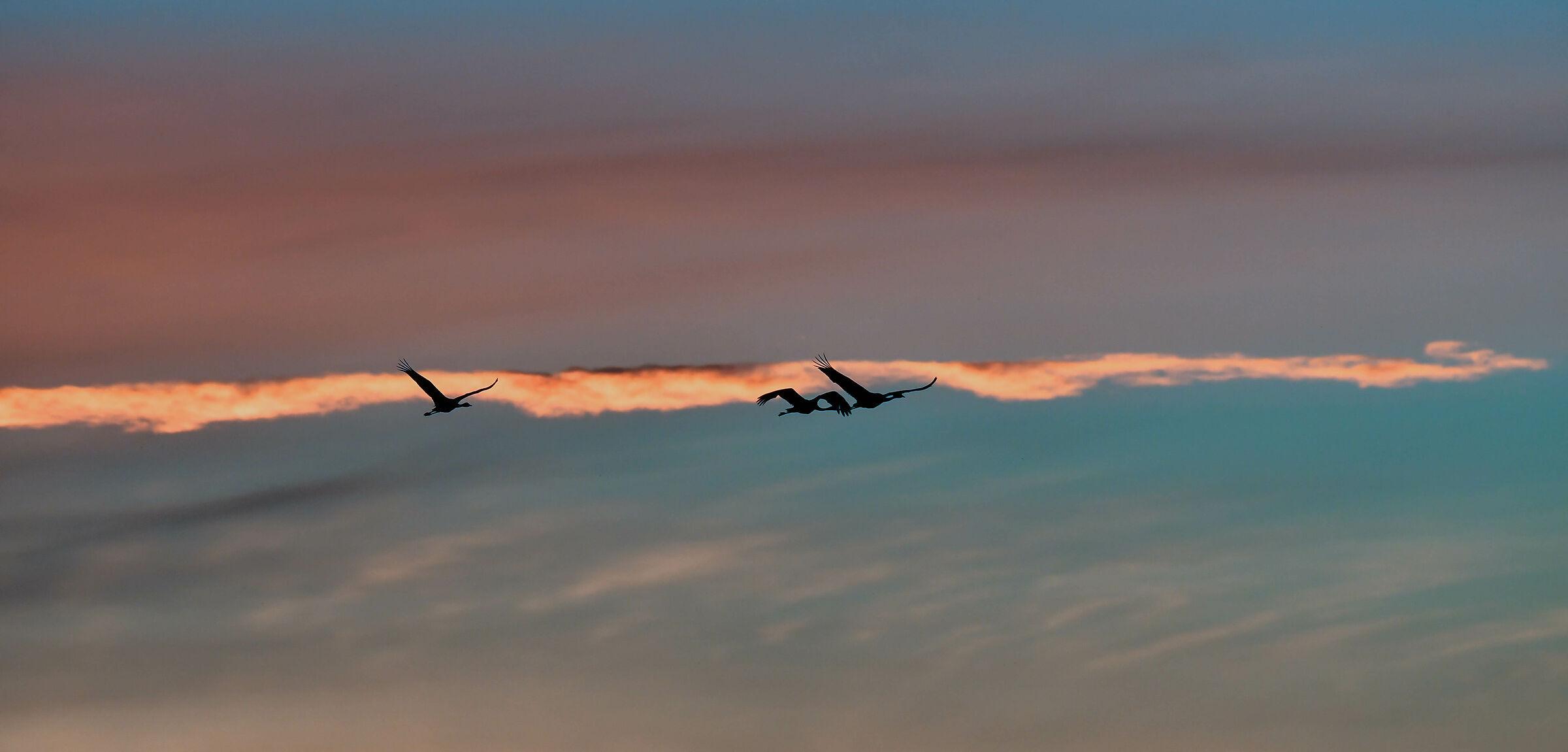 The cranes at sunrise...