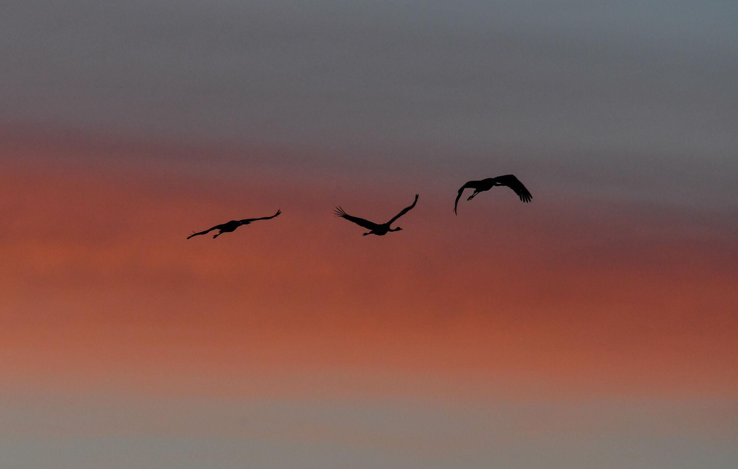The cranes at 5.30 a.m....