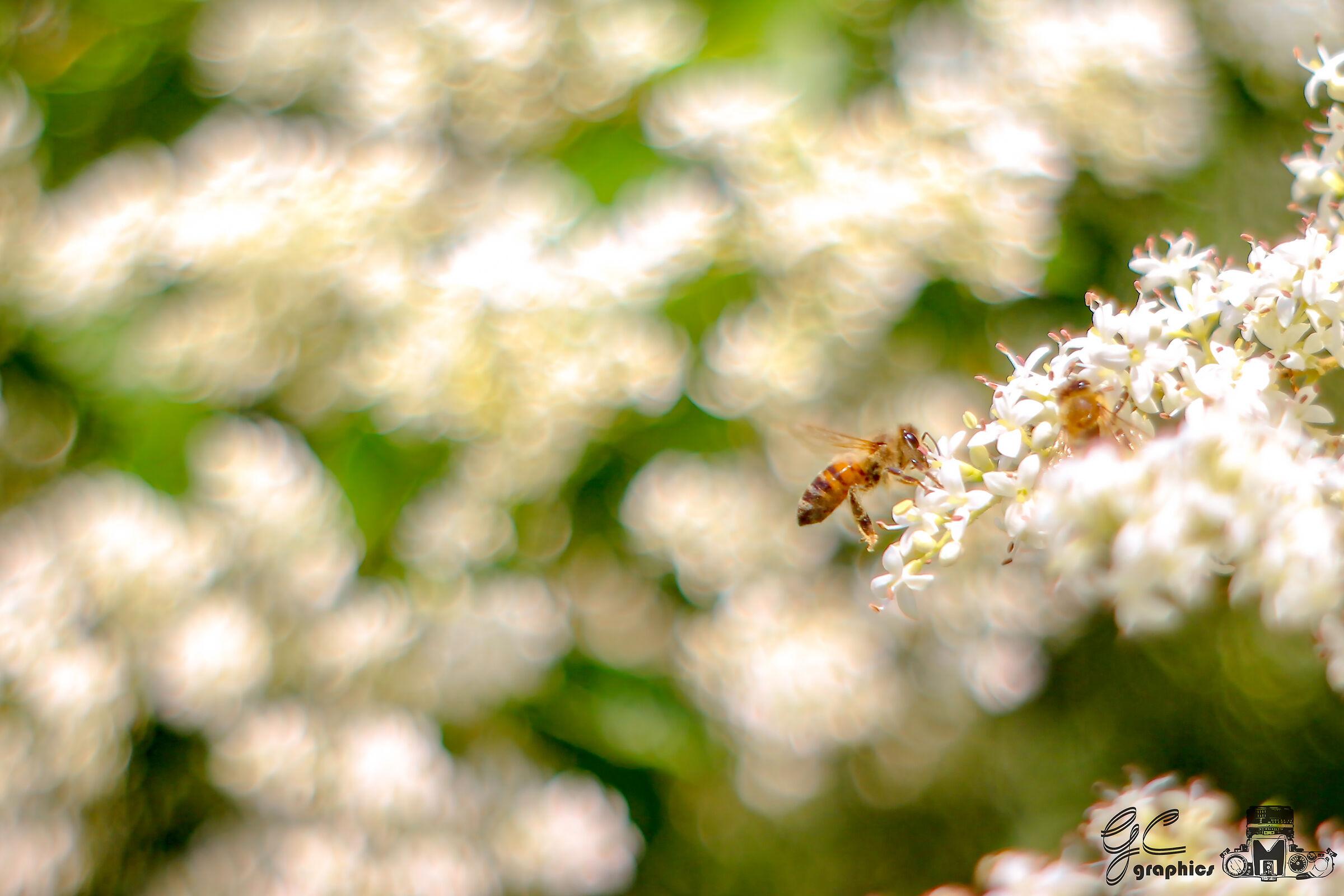 Nectar peeled...