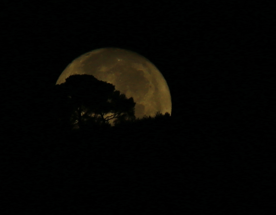moon sets behind the trees...