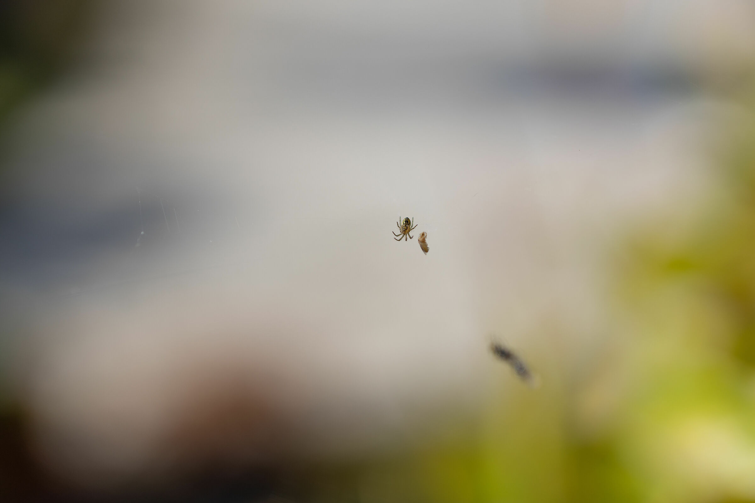 A tiny spider (it must have been about a millimeter)...