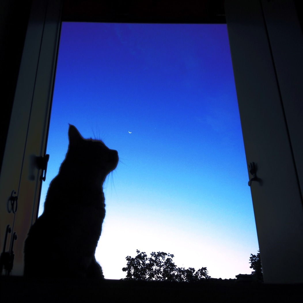 The Cat with the Moon...