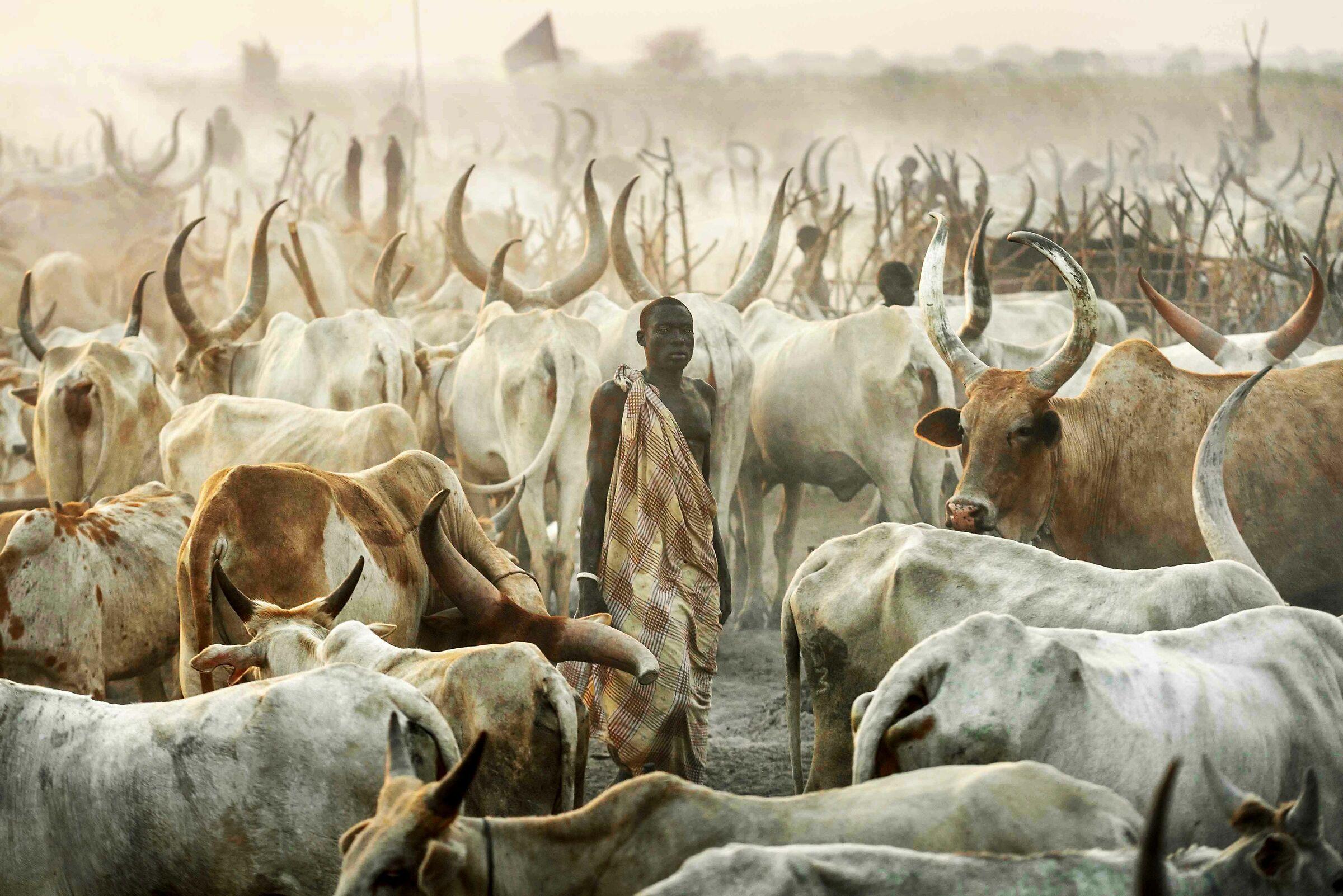 Cattle Camp...