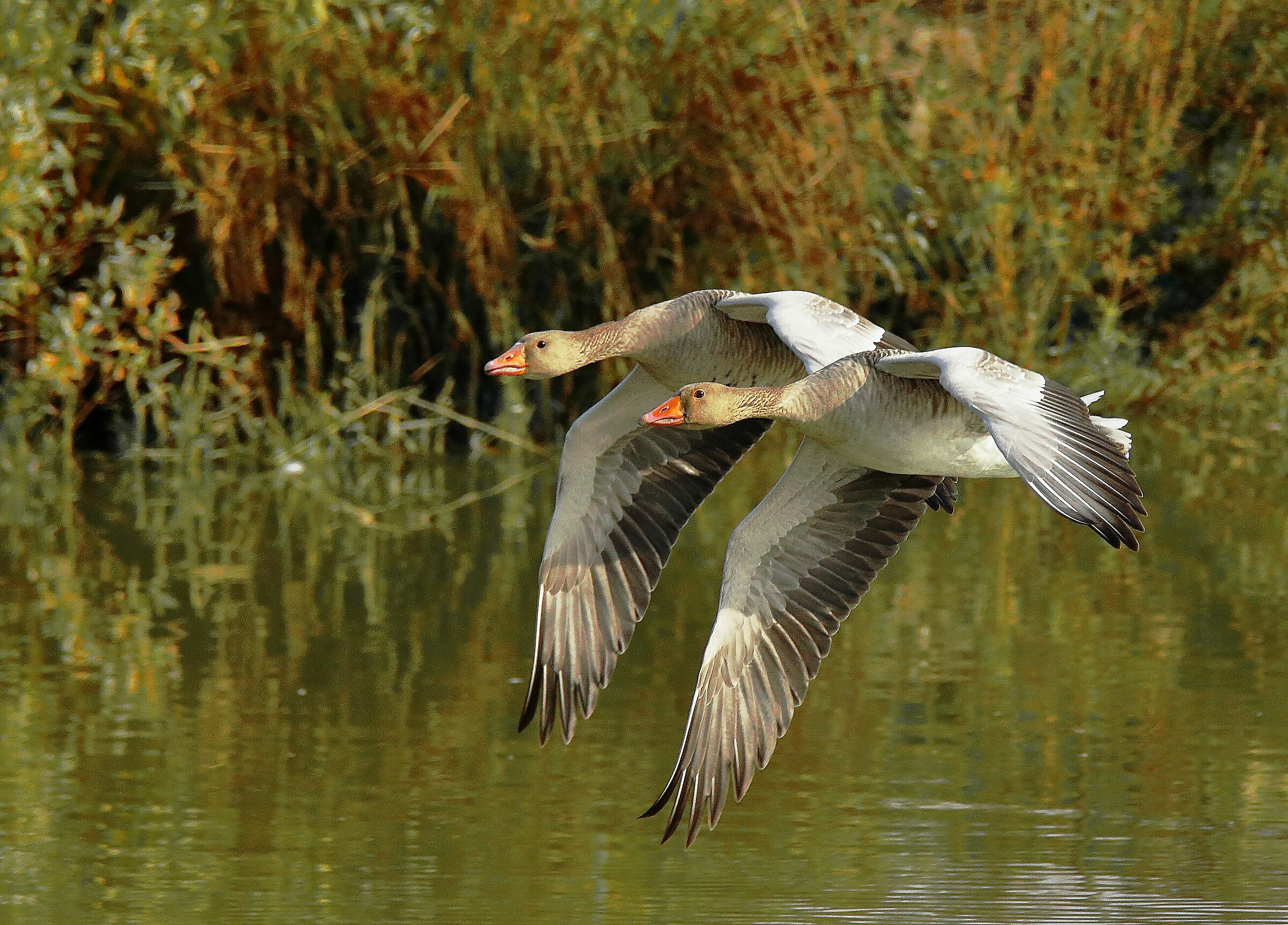 ... synchronized flight......