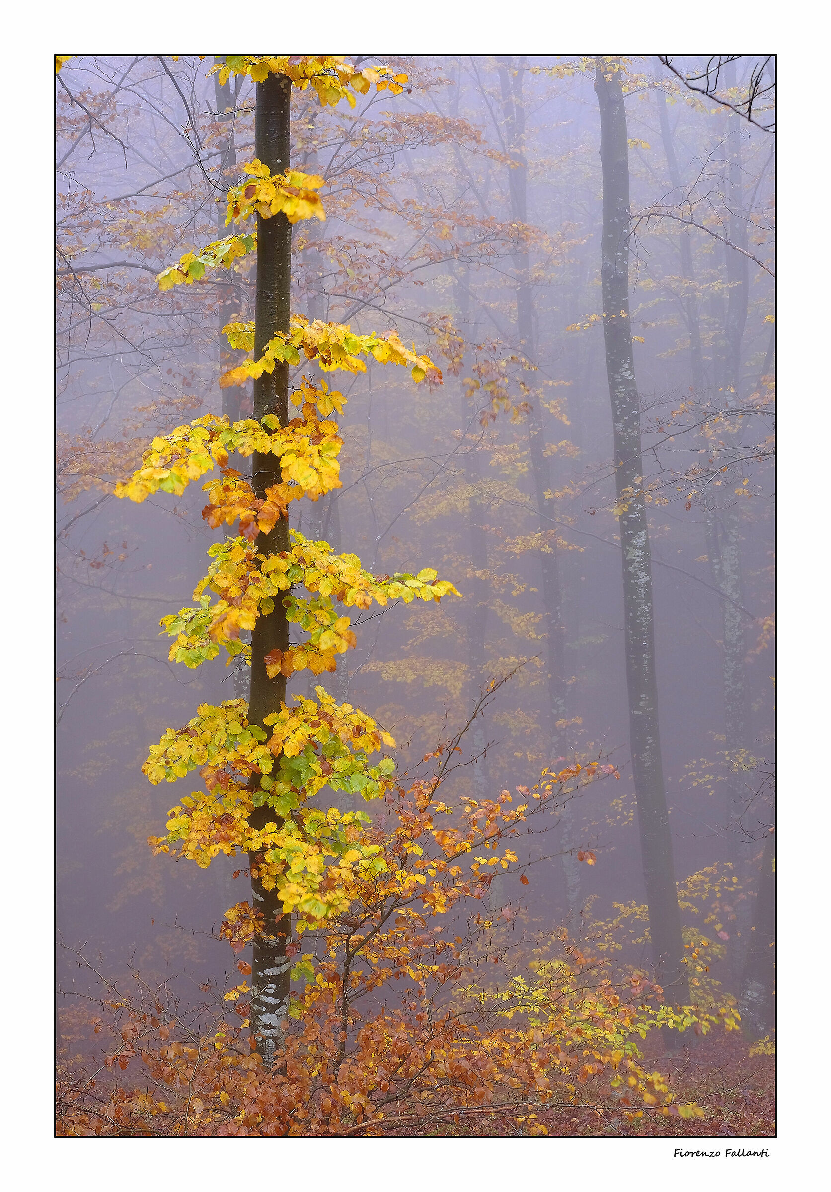 Autumn mists...