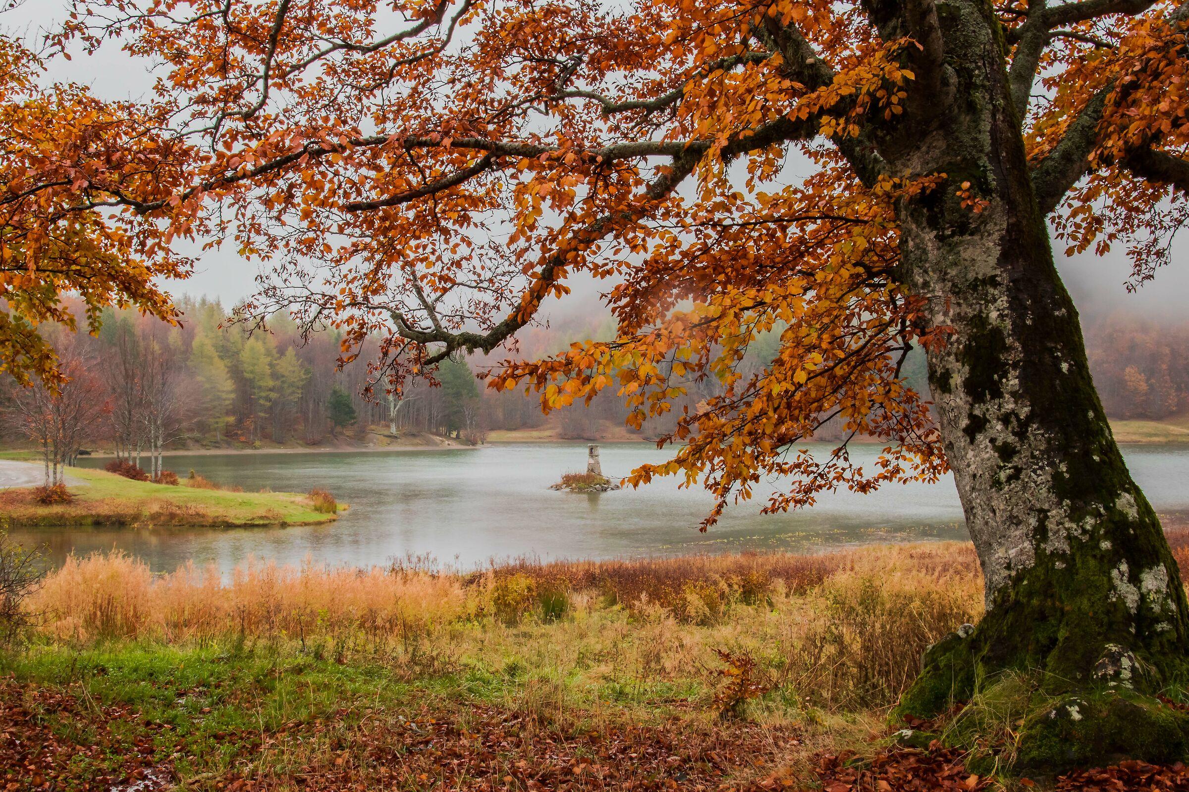 The Beech of Lake Calamone...