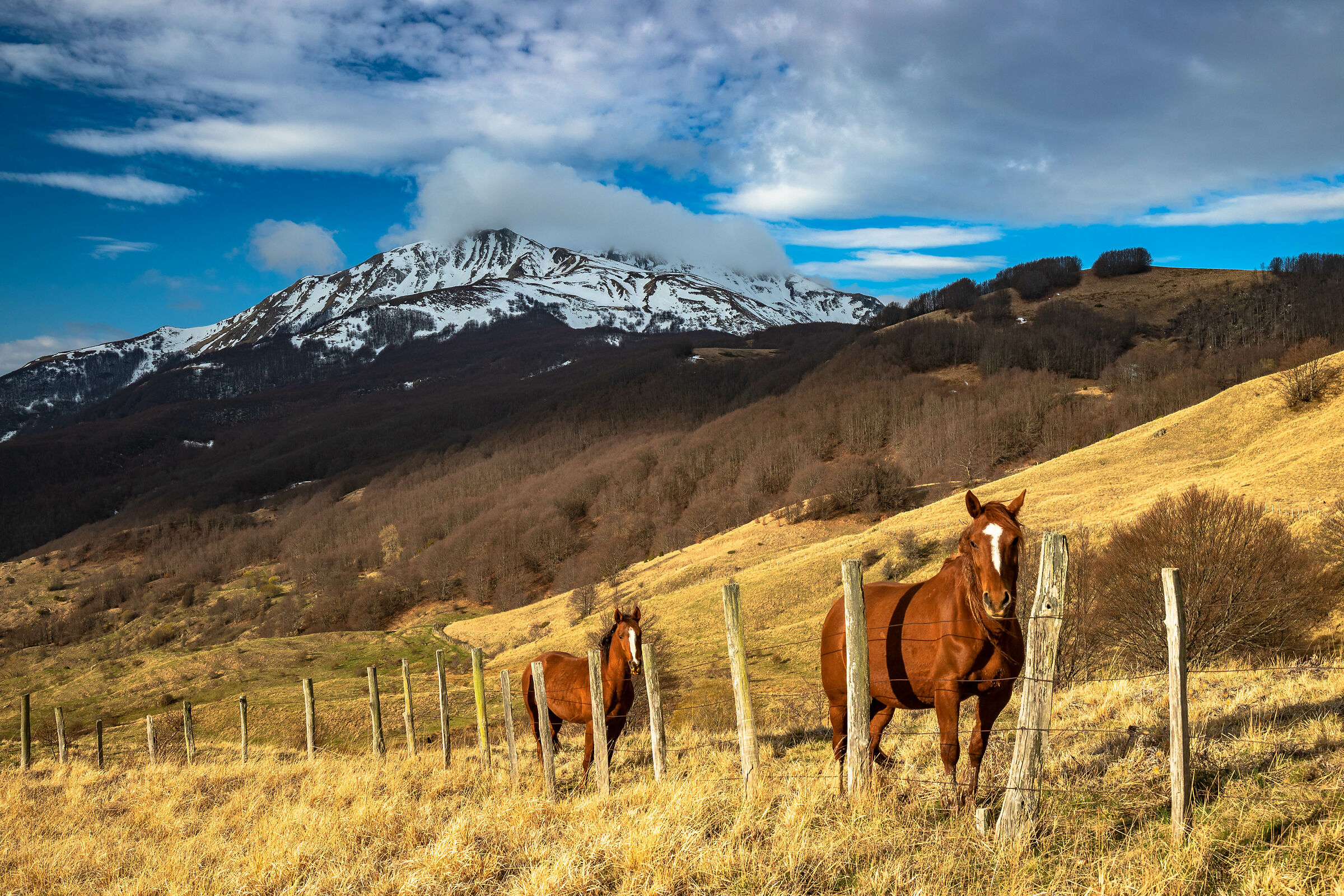 Horses at the foot of the Alpe di Succiso ...