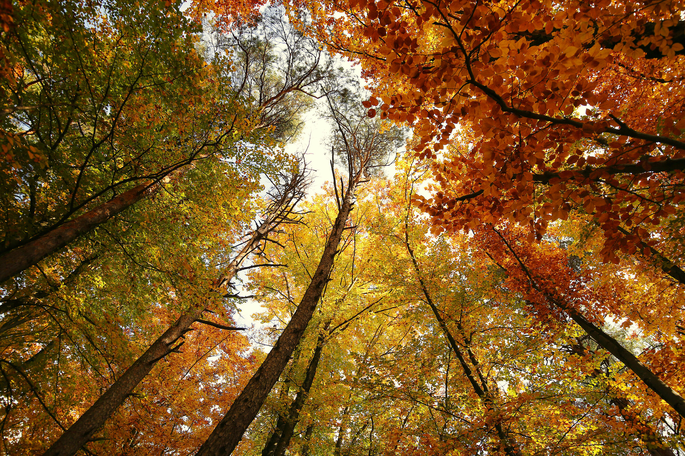 The forest of Castelvecchio...