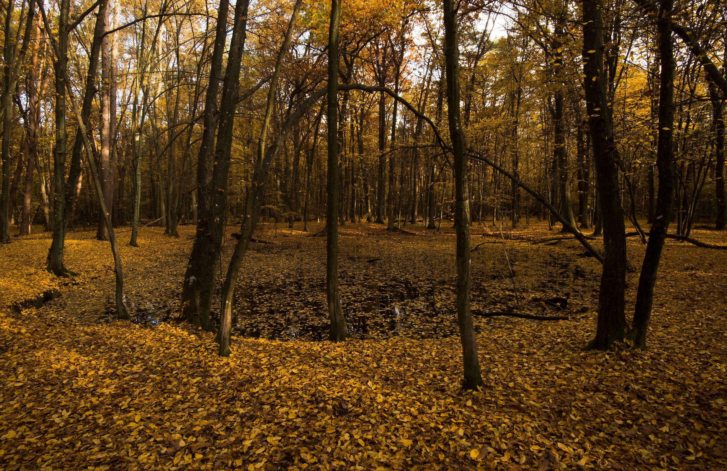 Autumnal impression 1...