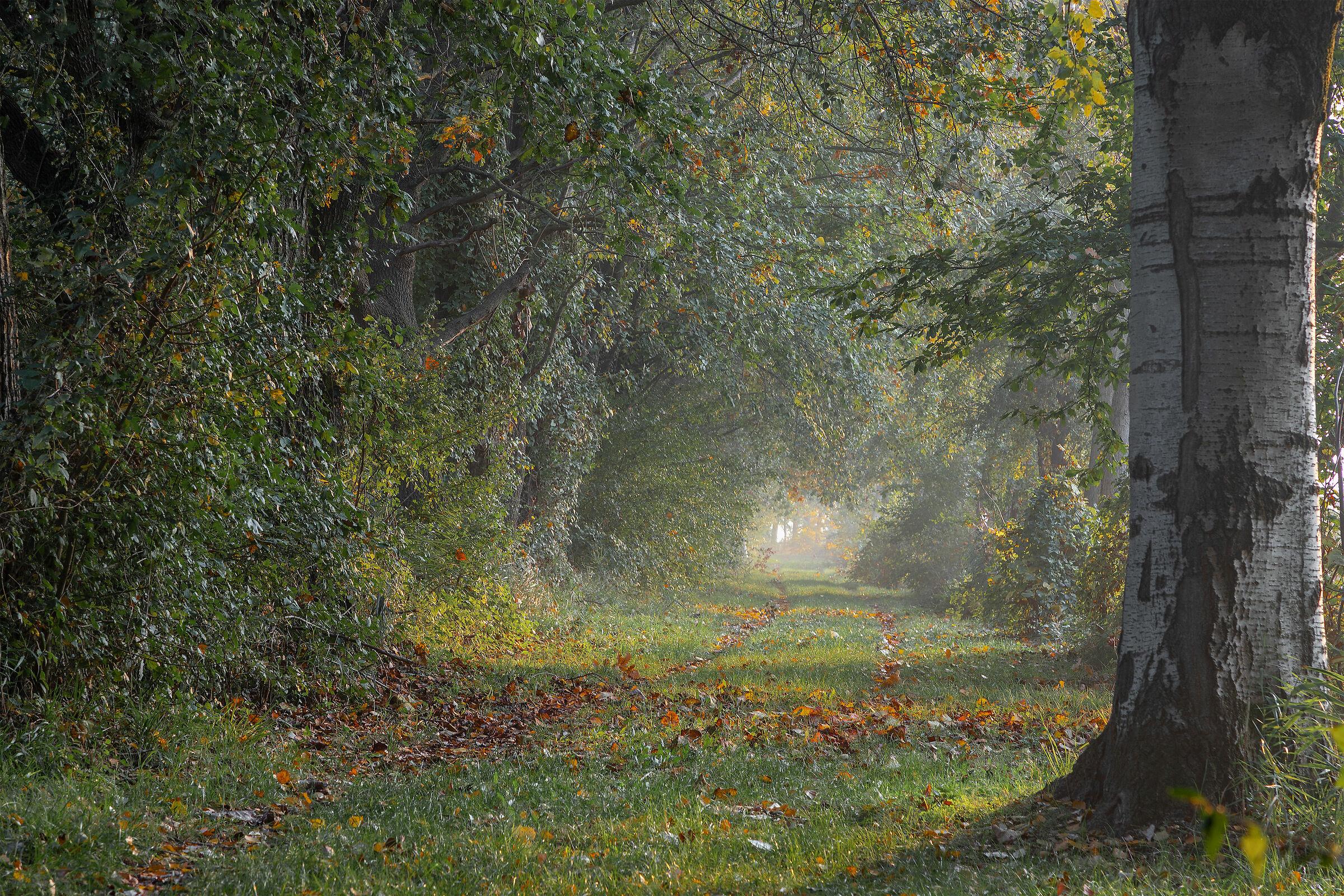 Violani grove...