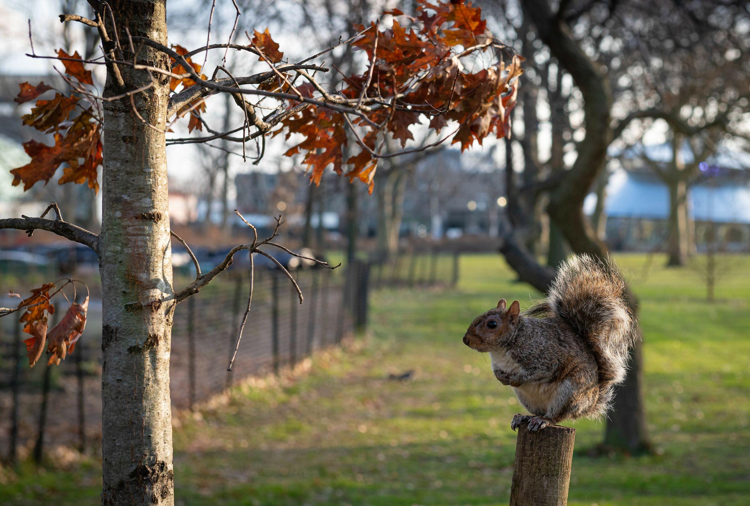 Little Squirrel...