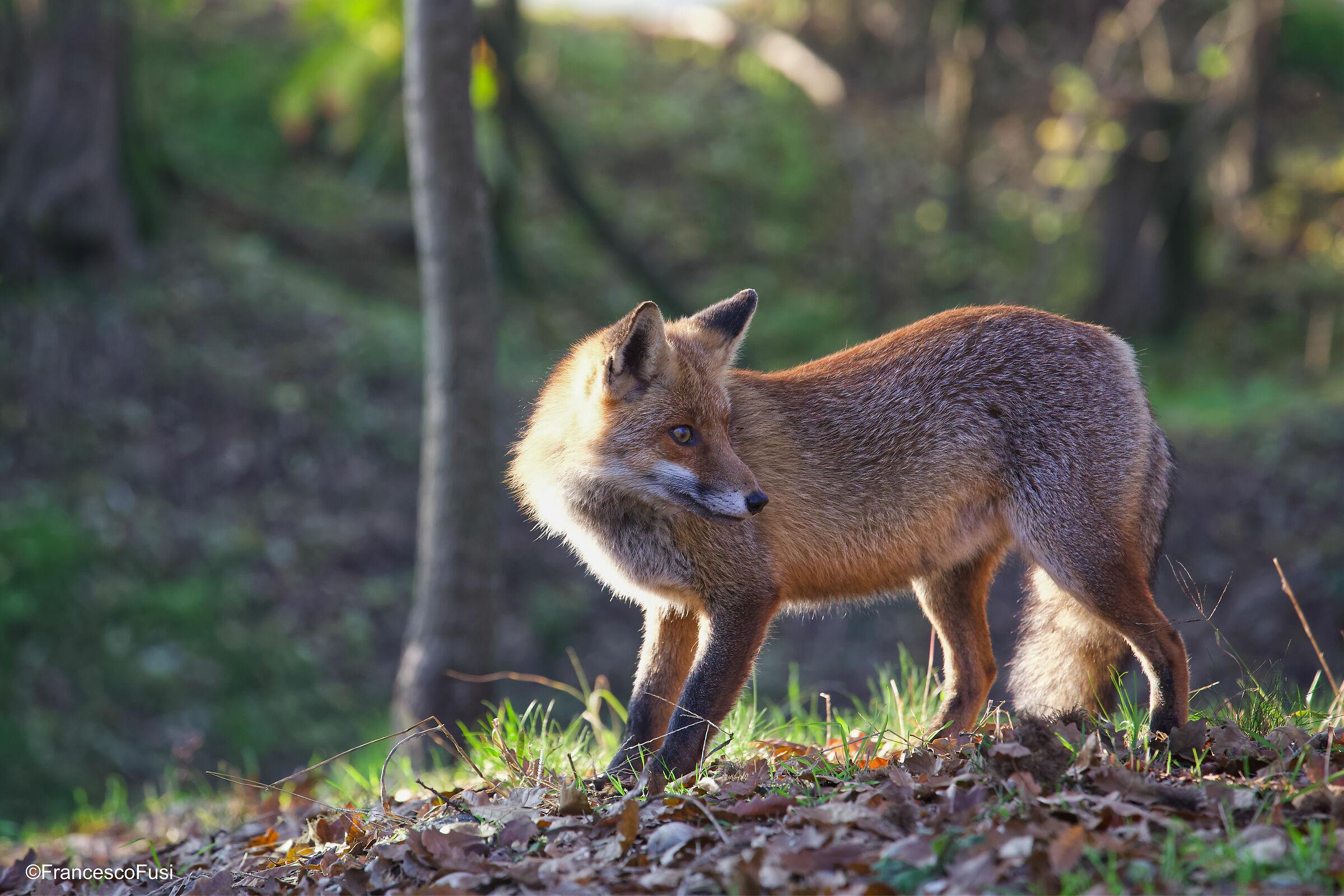 Fox 2...