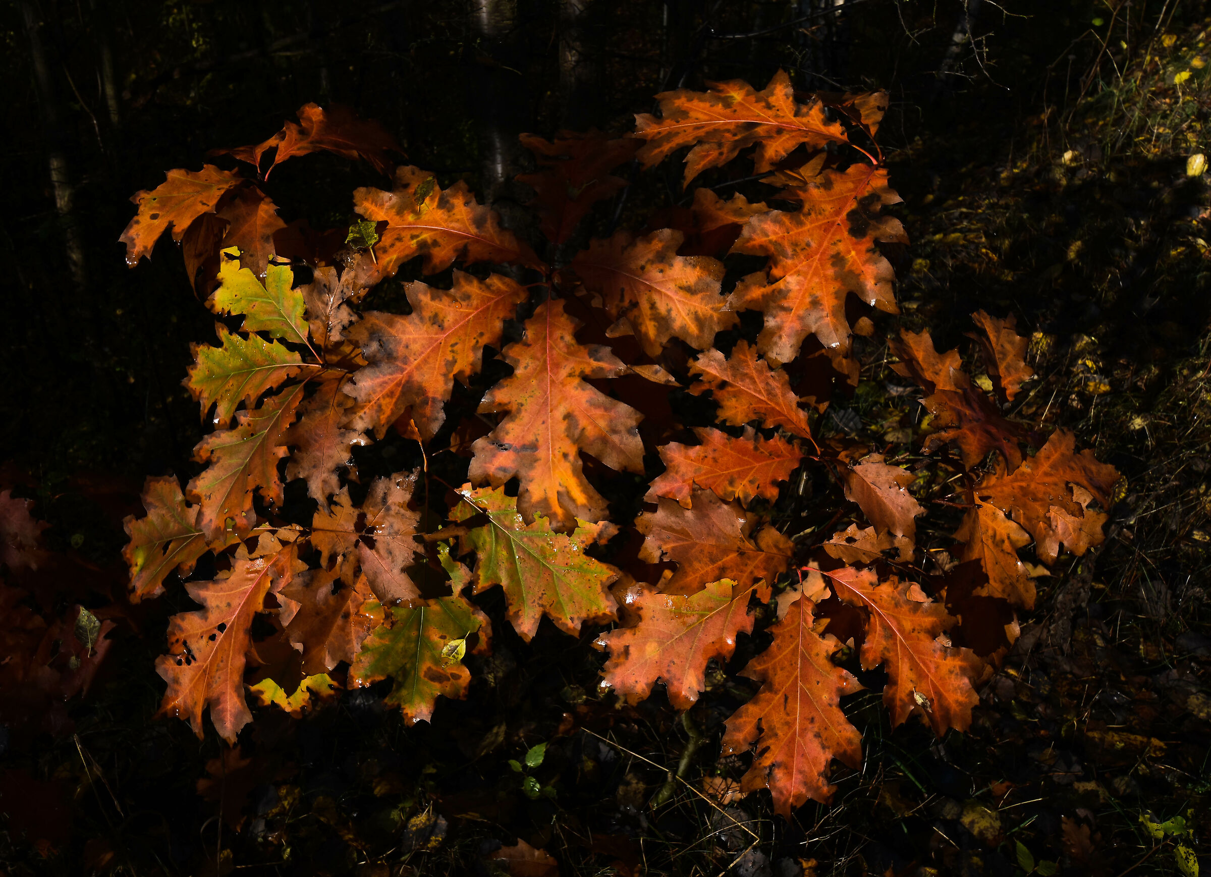 Autumnal impression 7...