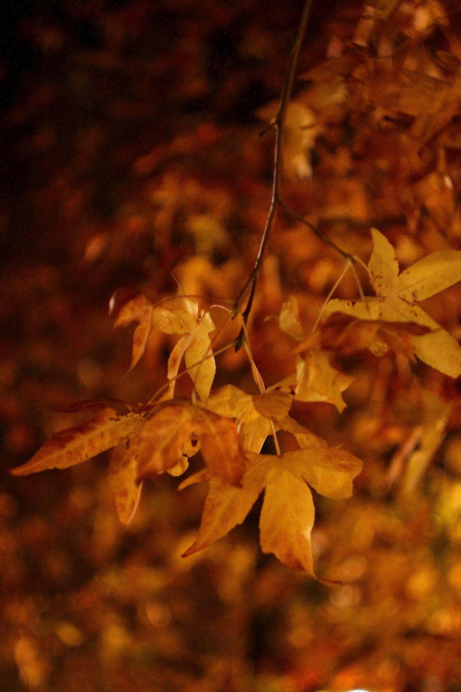 Leaves.. Autumn.....