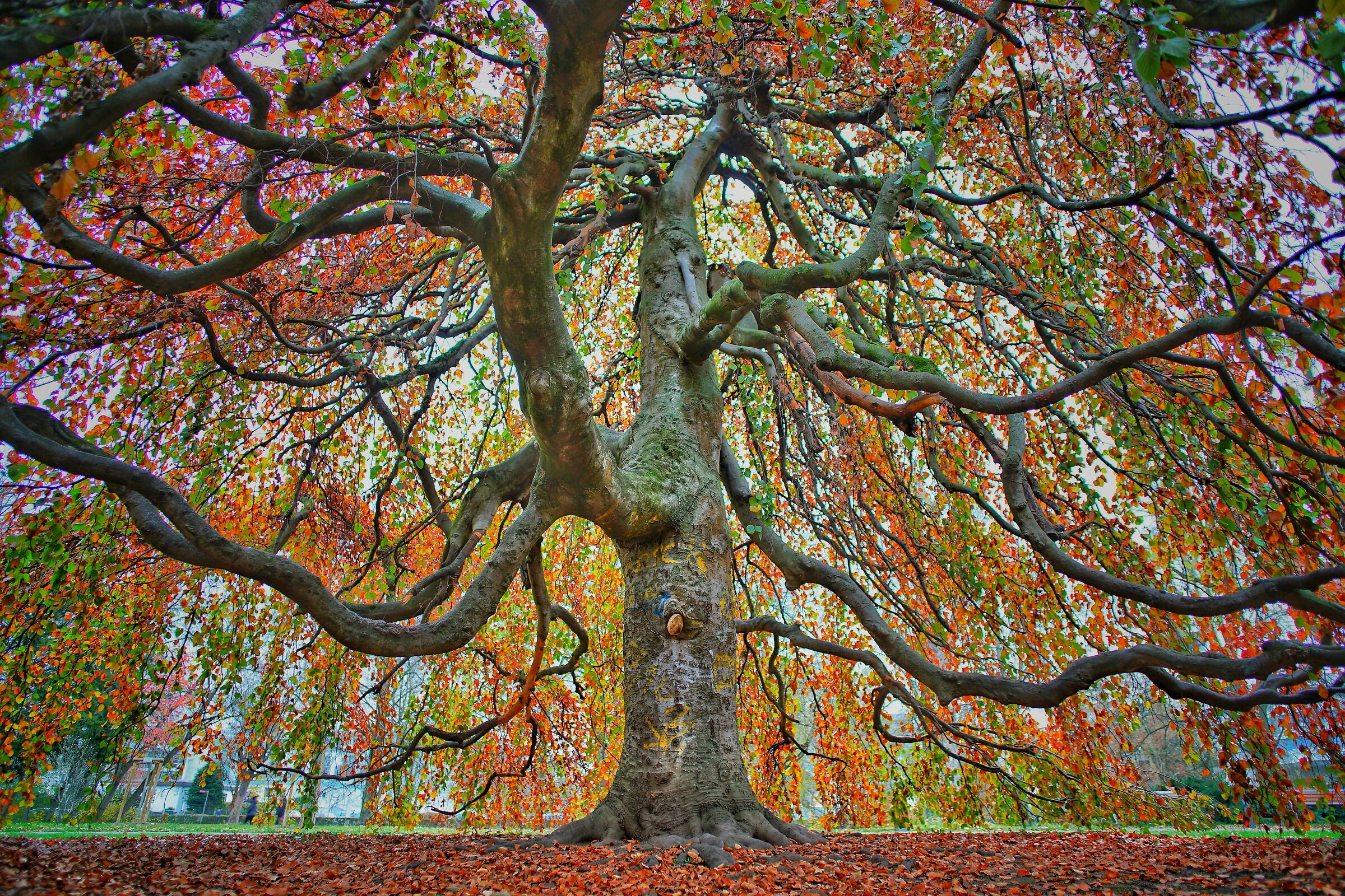 Under the Colored Tree...