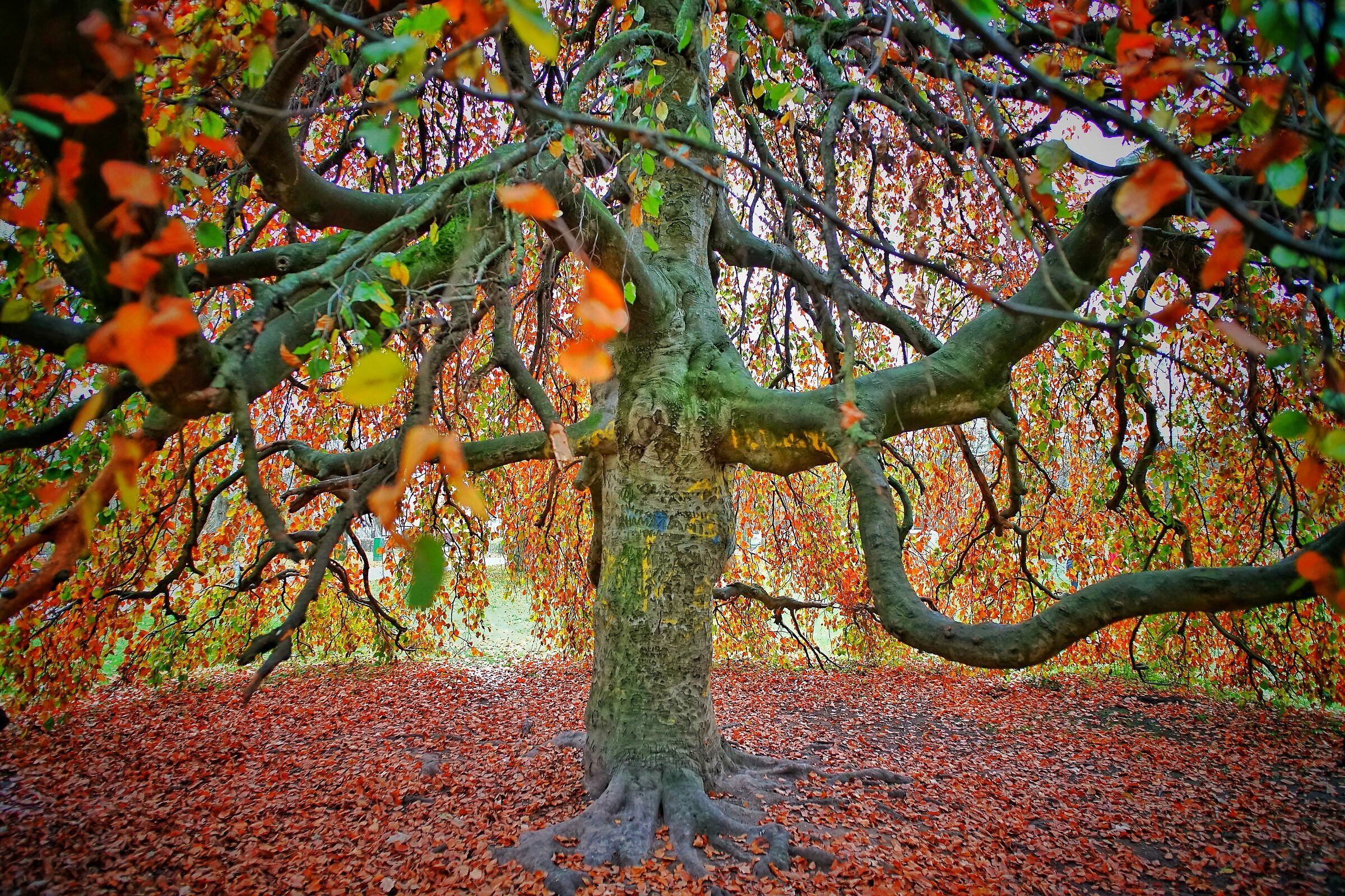 Under the Colored Tree 2...