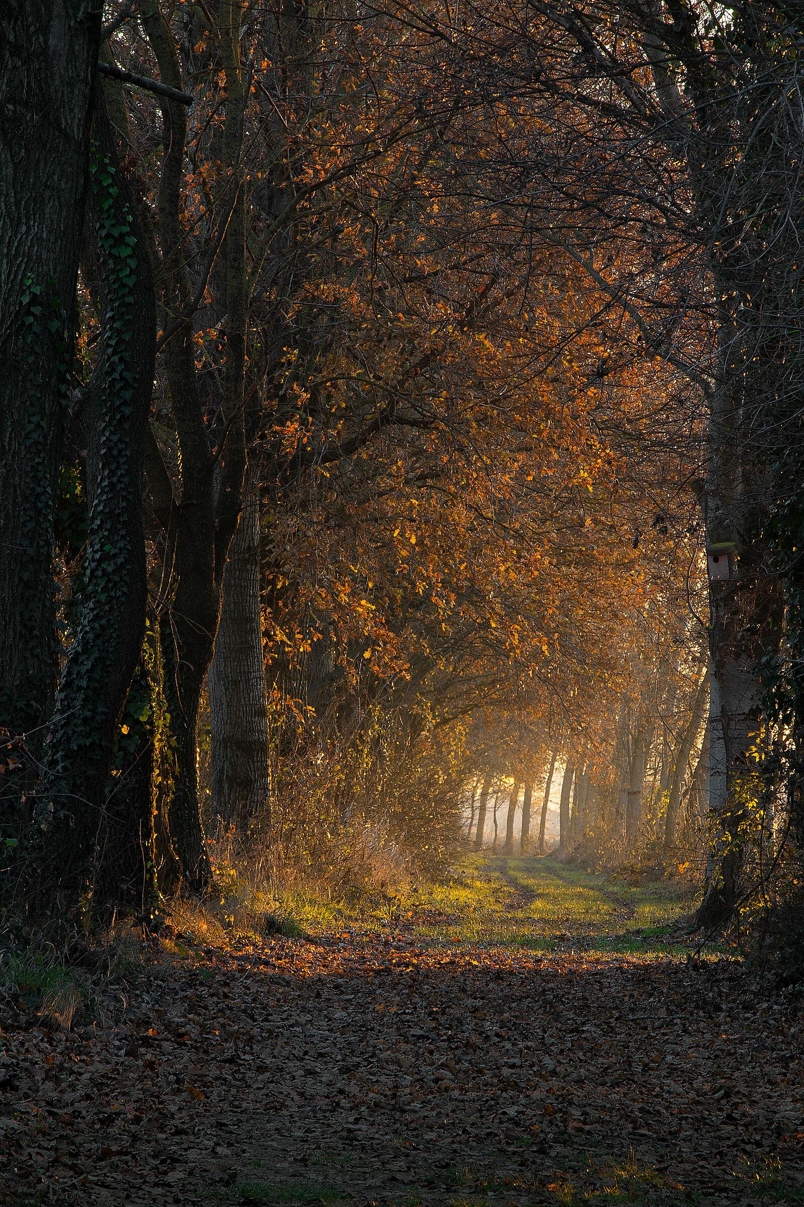 grove towards evening...