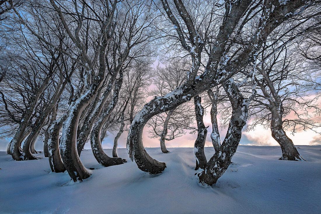 Dancing trees...