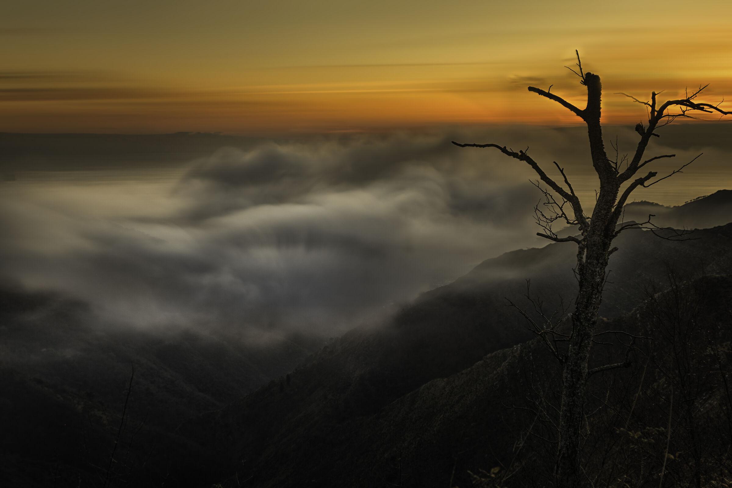Mount Fasce...