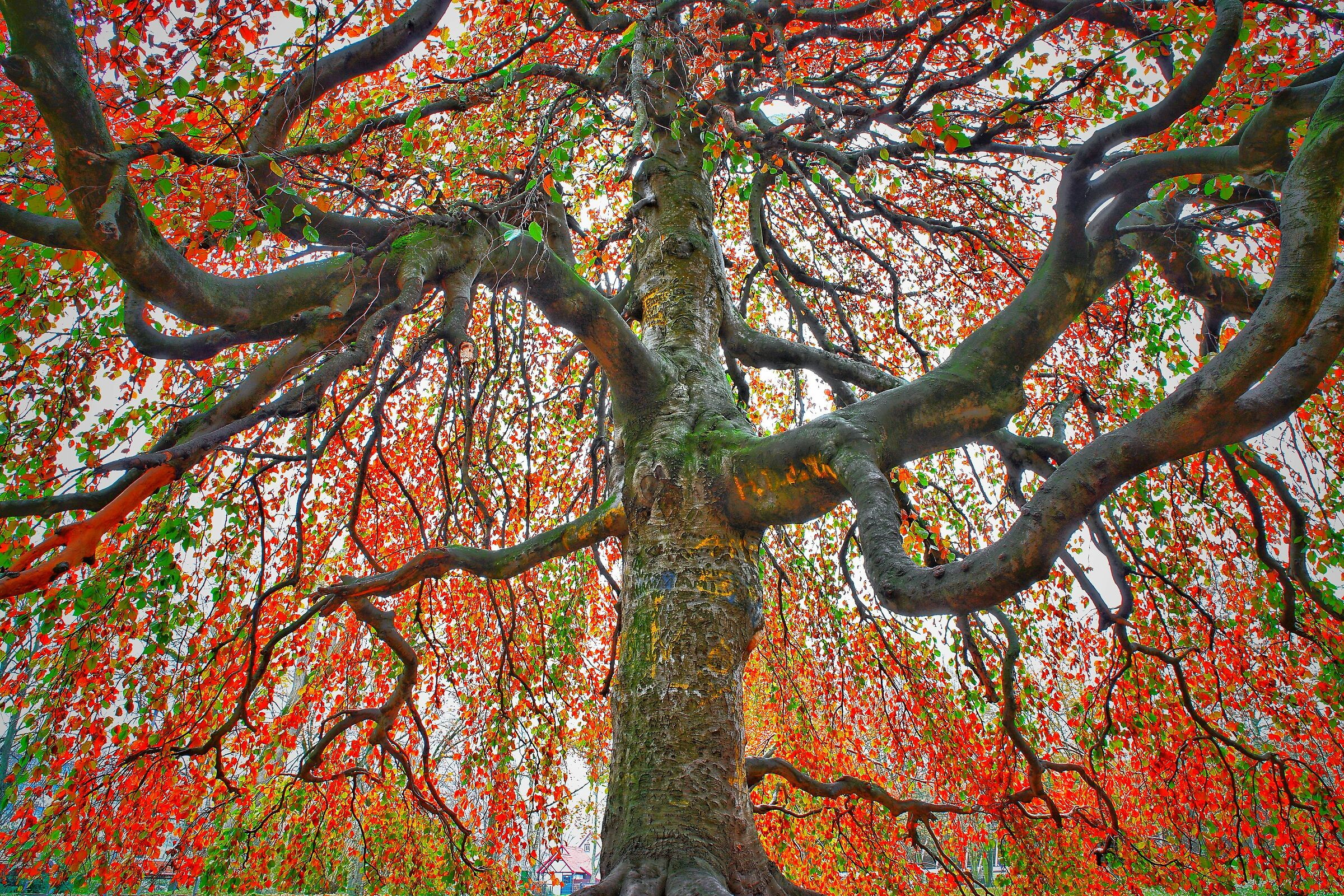 Under the Colored Tree 3...