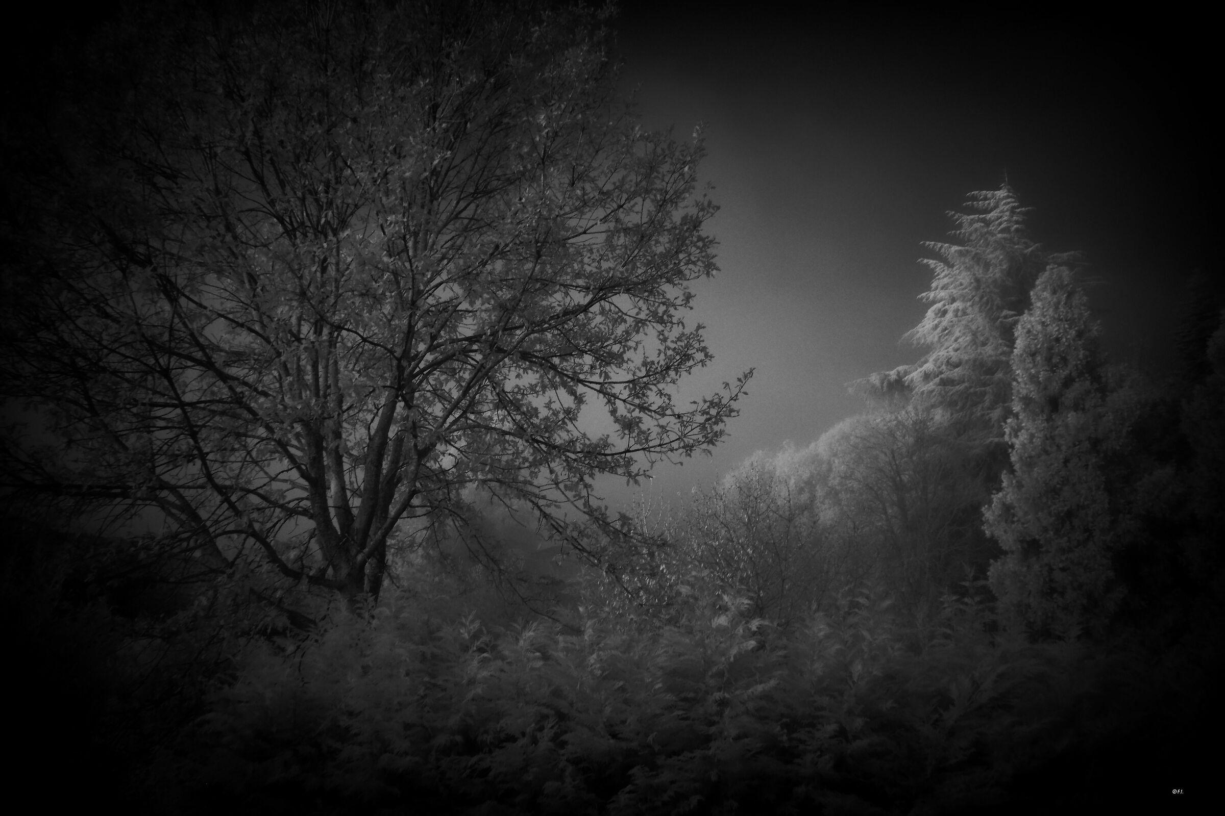 la nebbia mattutina...