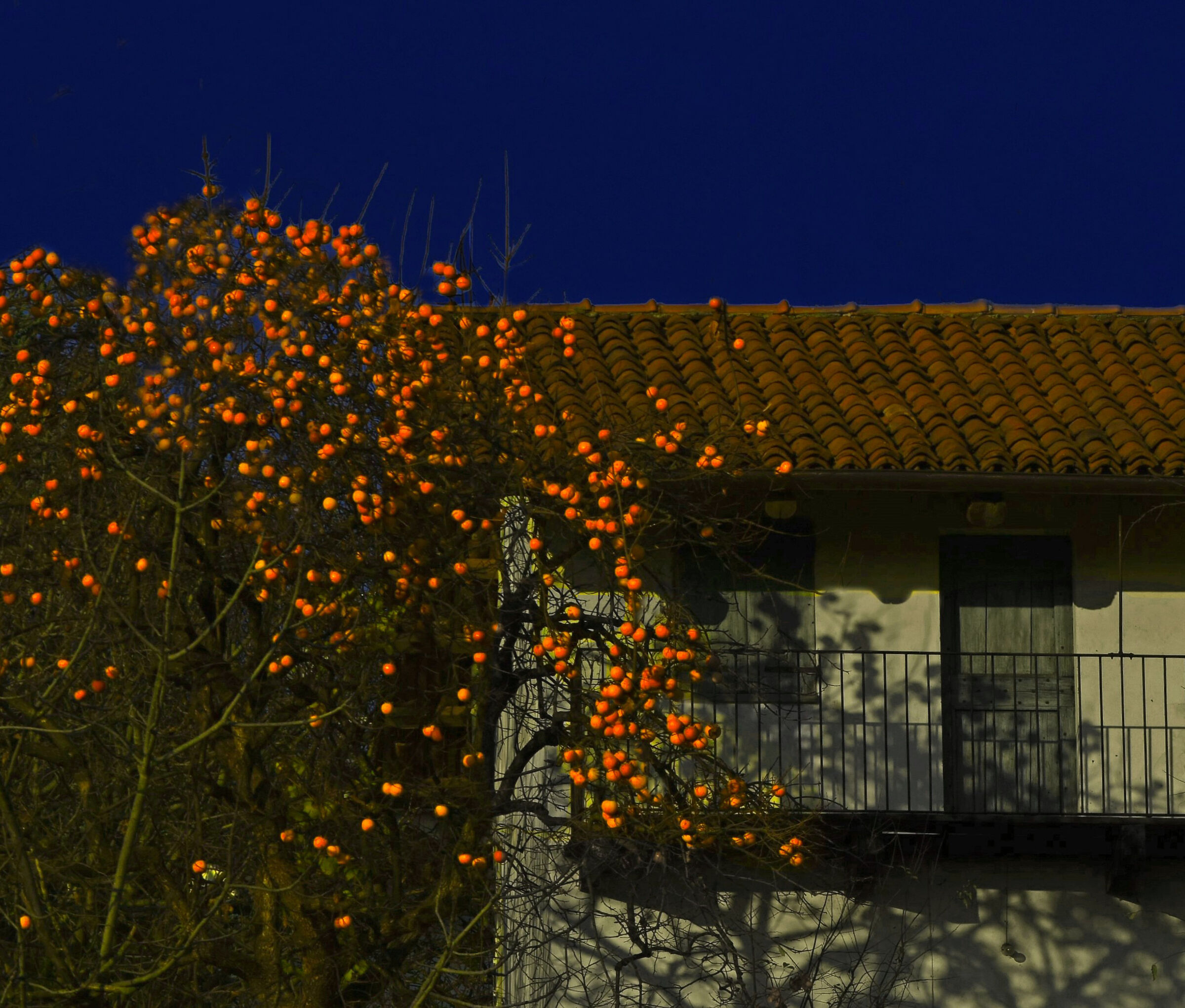 Persimmon Trilogy - 3...