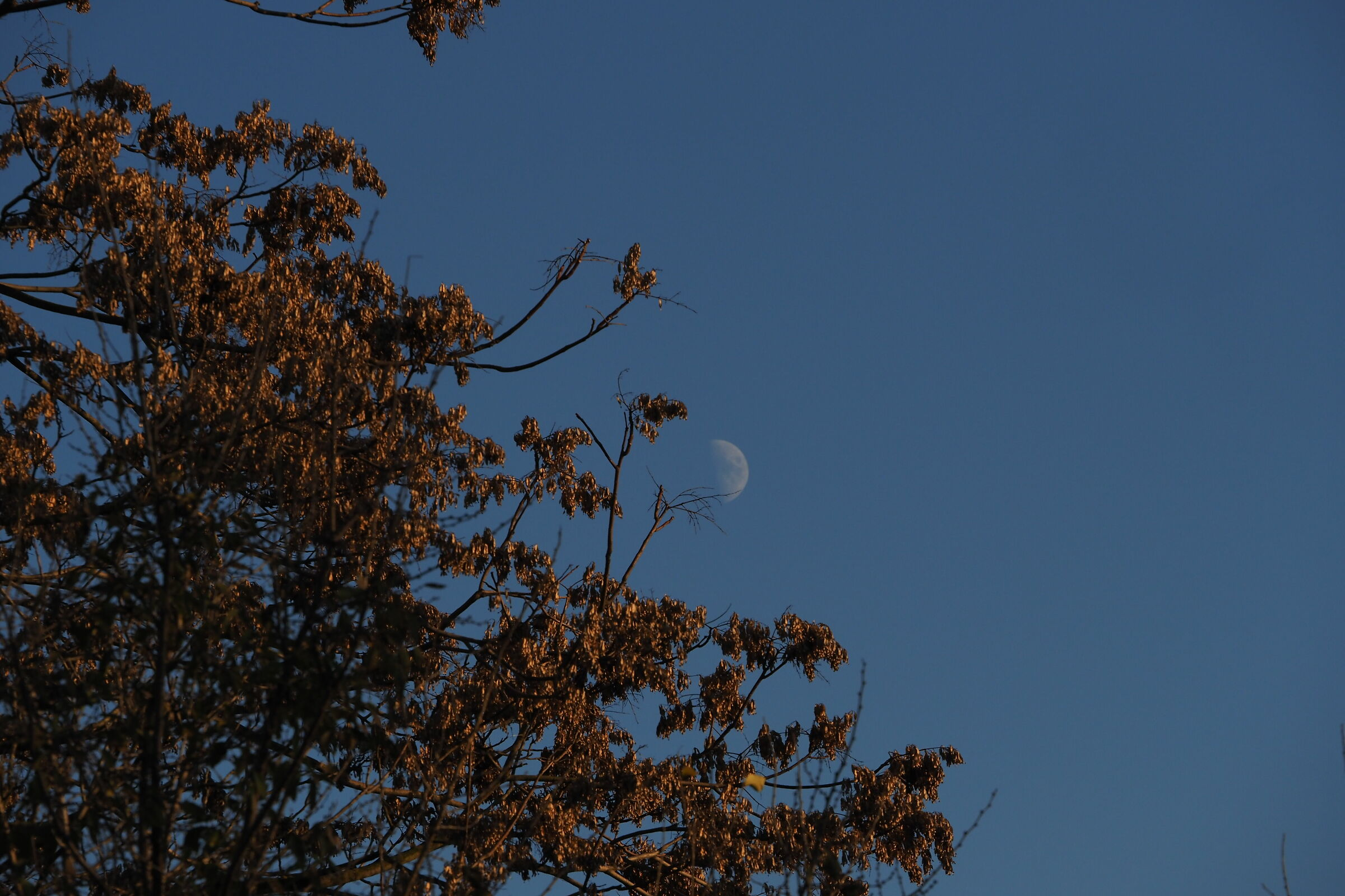 and the moon peeps......