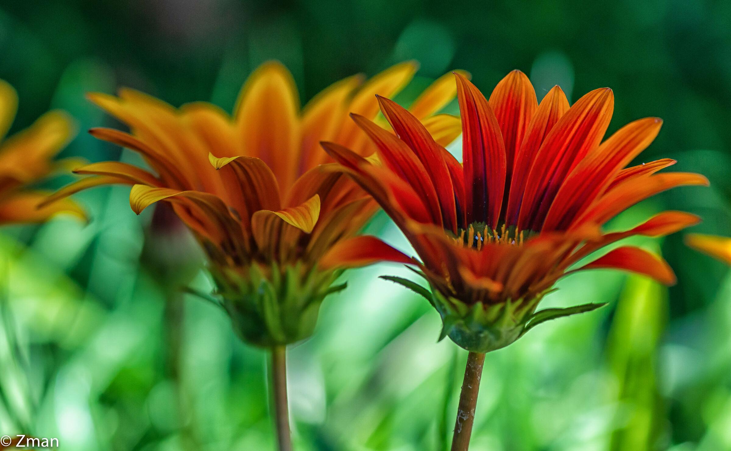 Treasure Flowers...