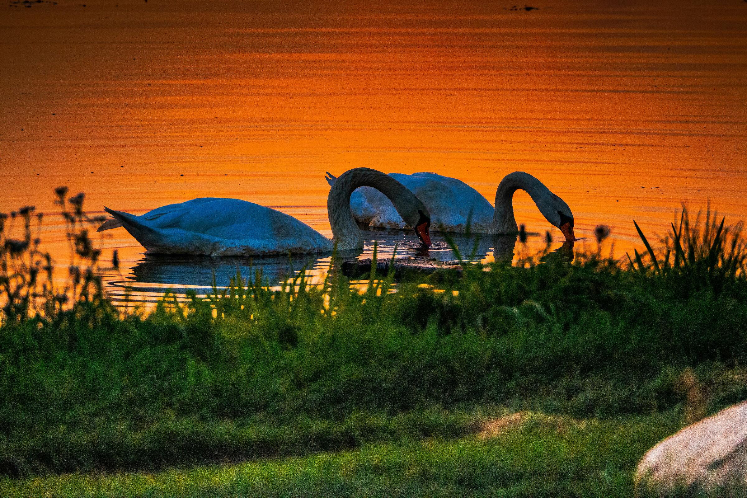 Swan Lake dance...