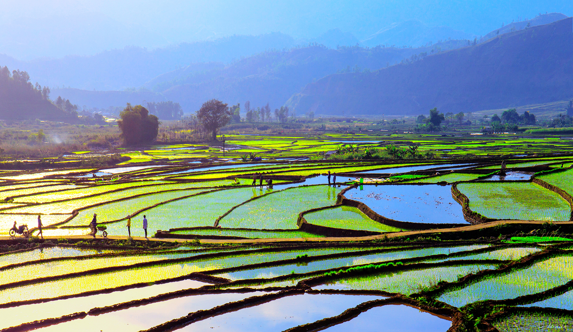 Vietnamese farmers create many beauties in the ...