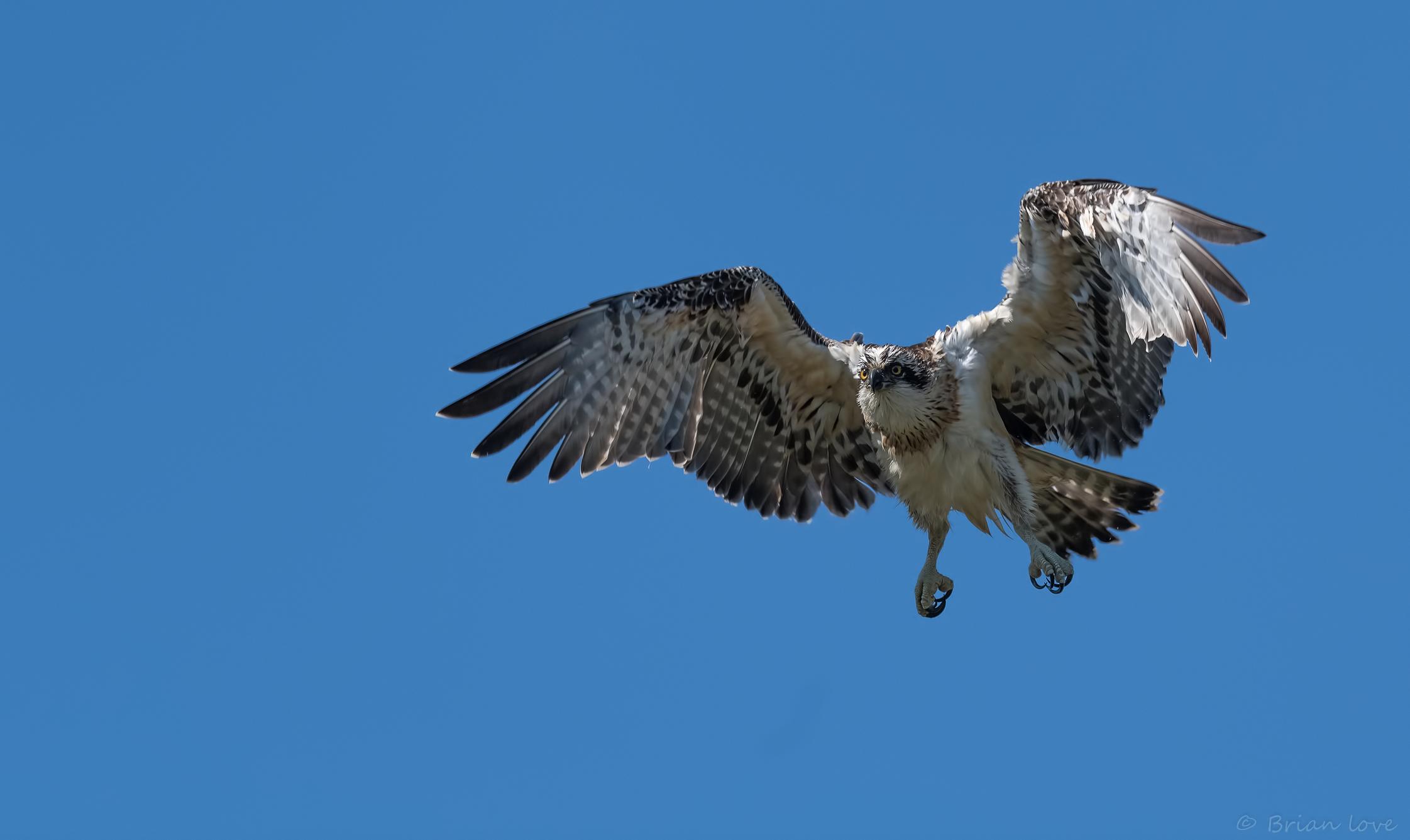Returning to the nest...