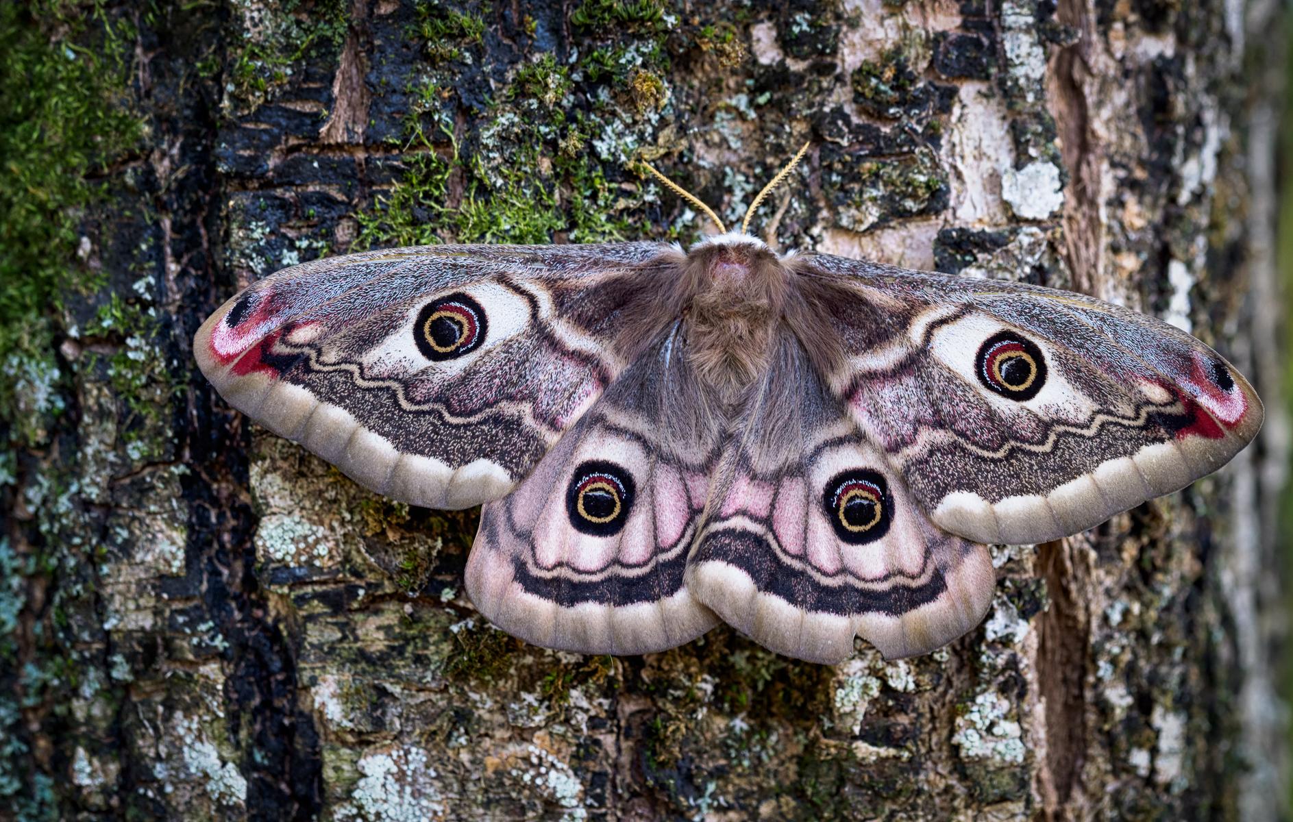 Moth...