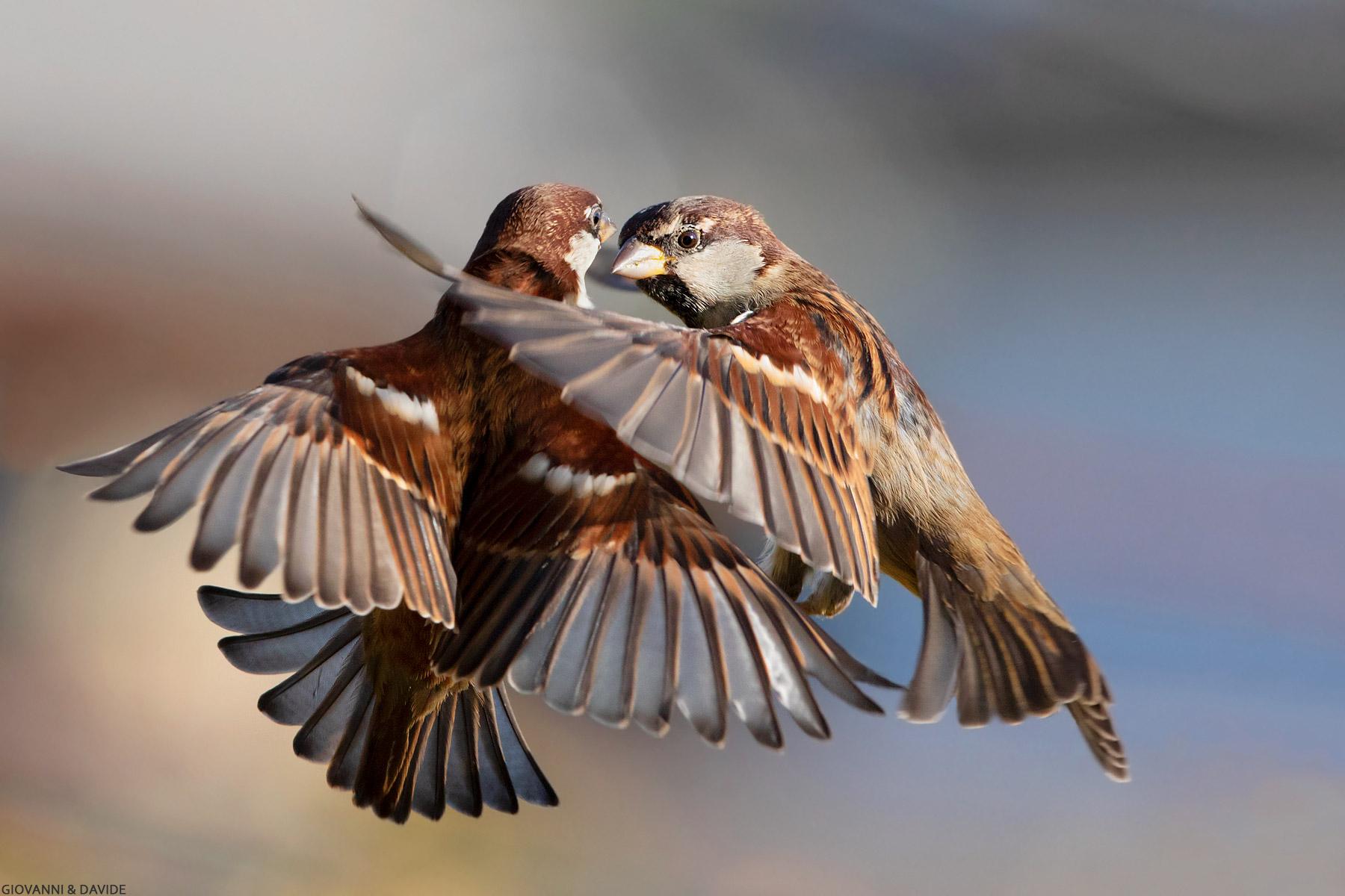 ... A twinkling of wings......