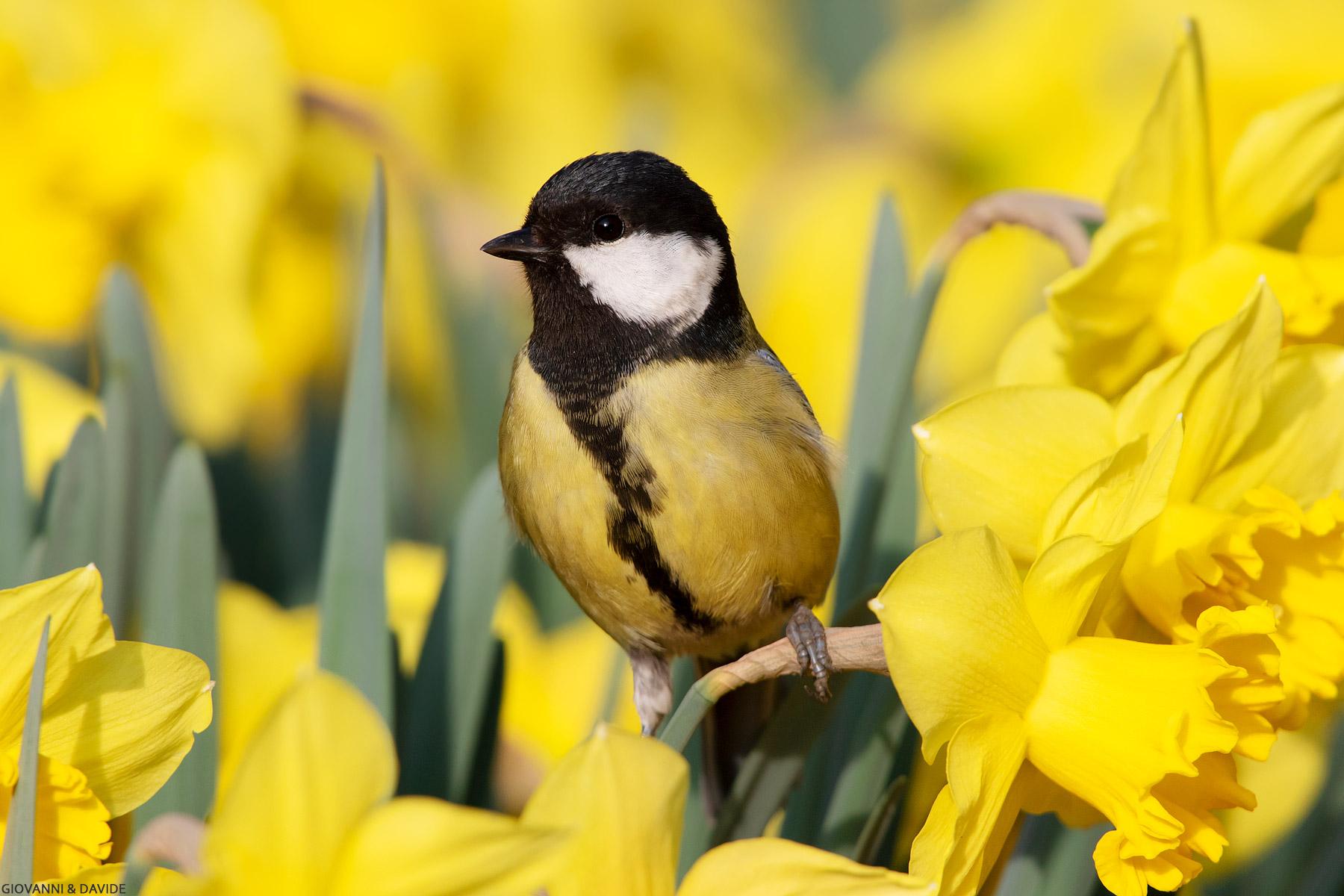 ... Spring......