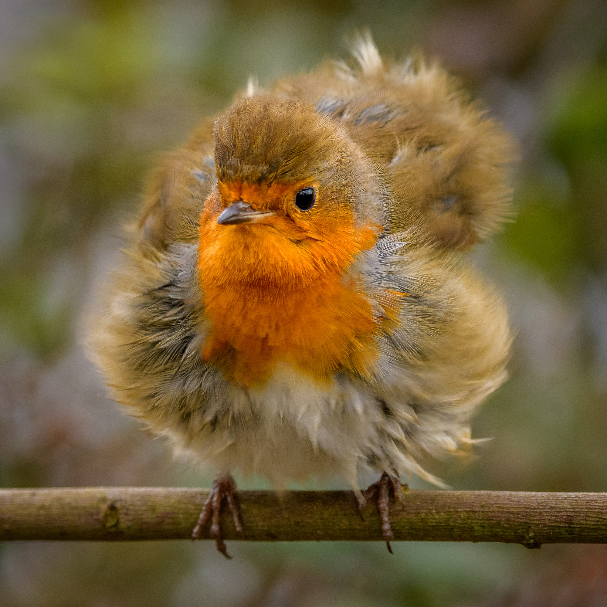 All Fluffed Up...