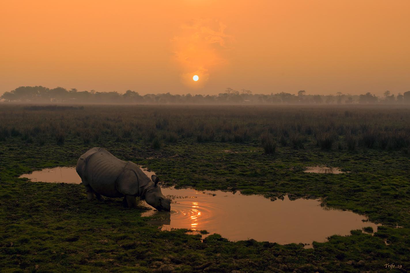 At Dawn... Kaziranga National Park...