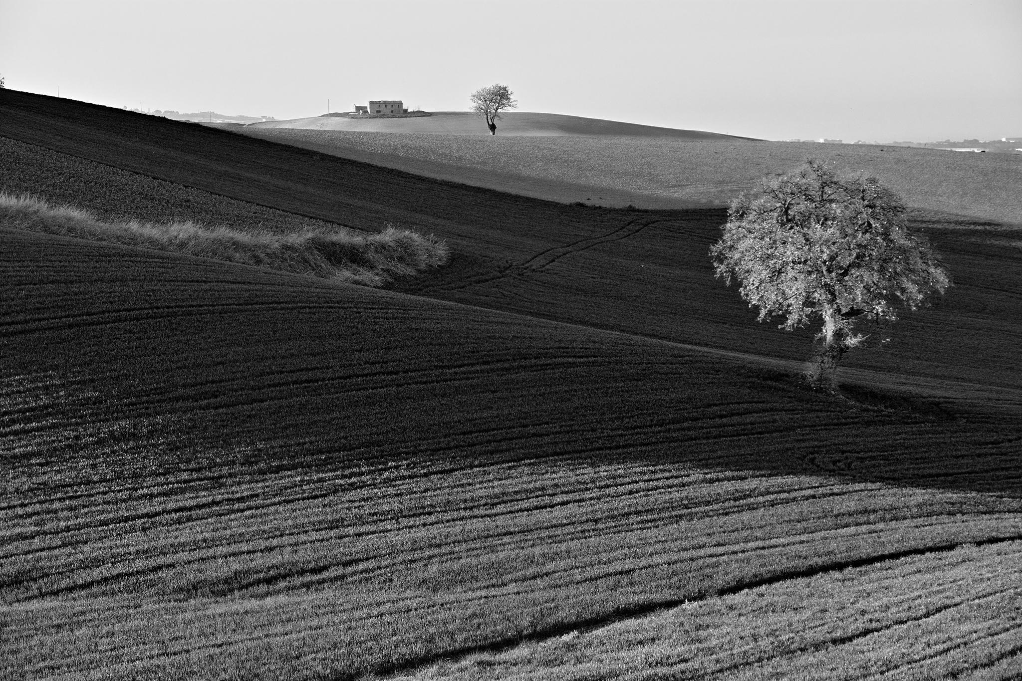 Pettinated Hills...