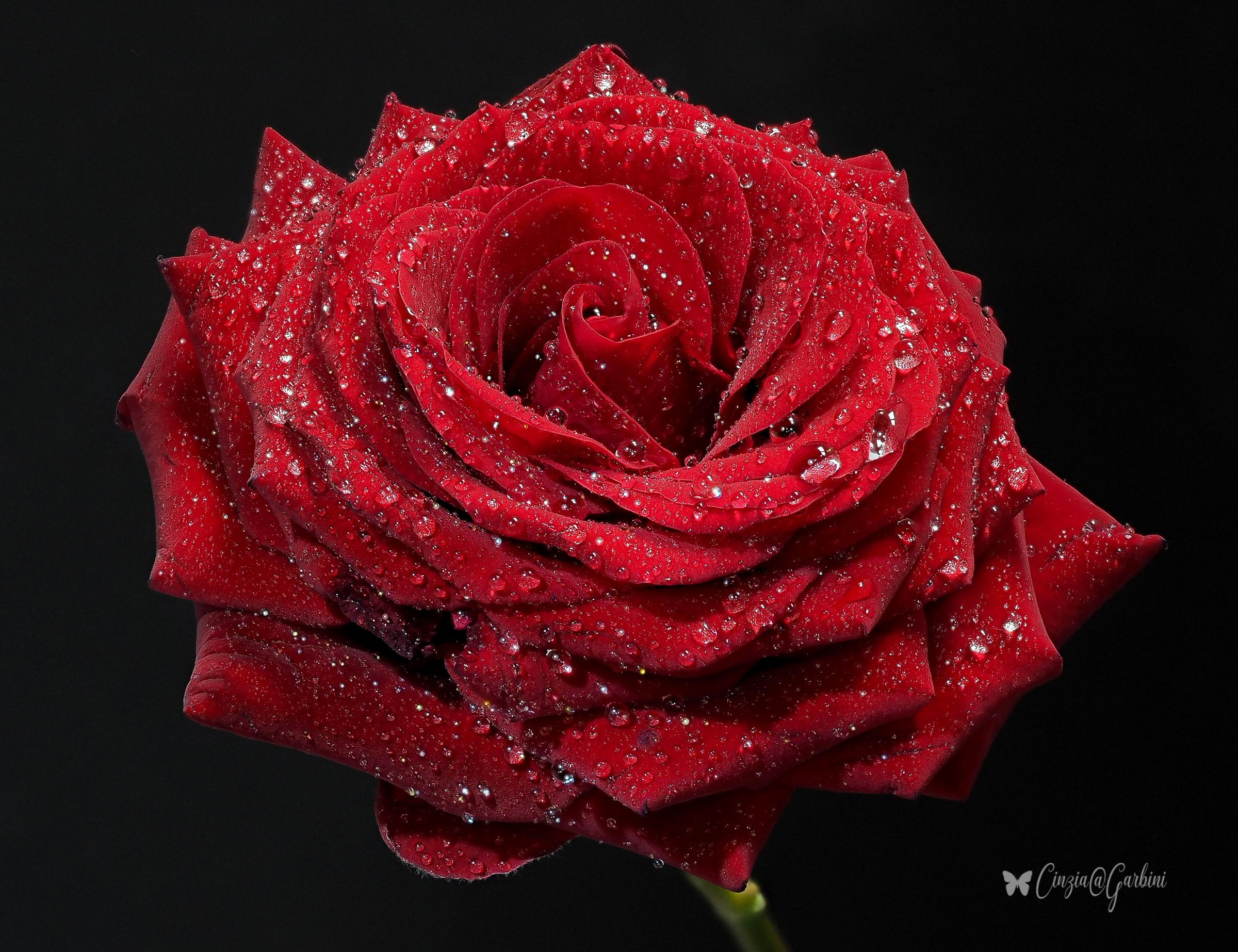 Rosso Rubino...
