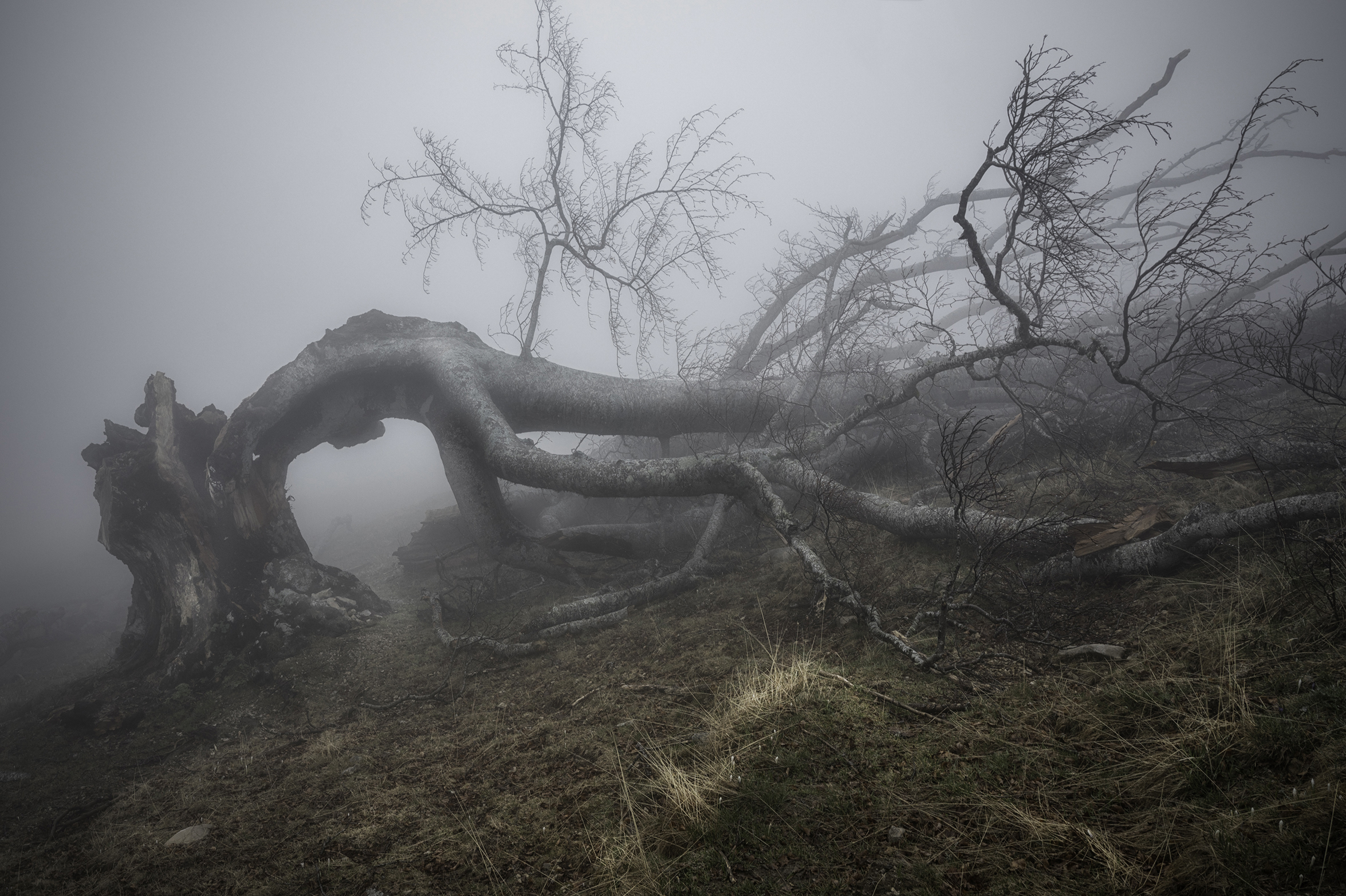 Beech Forest 13...
