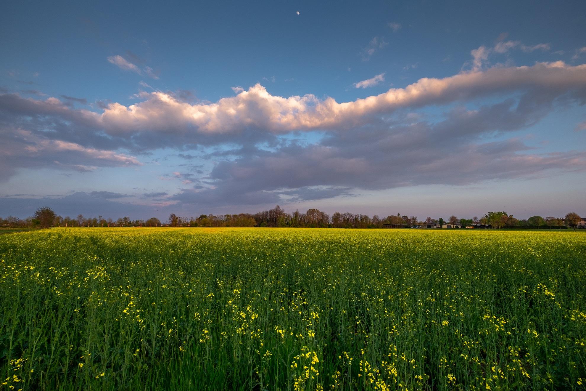 Placid Spring Evening...