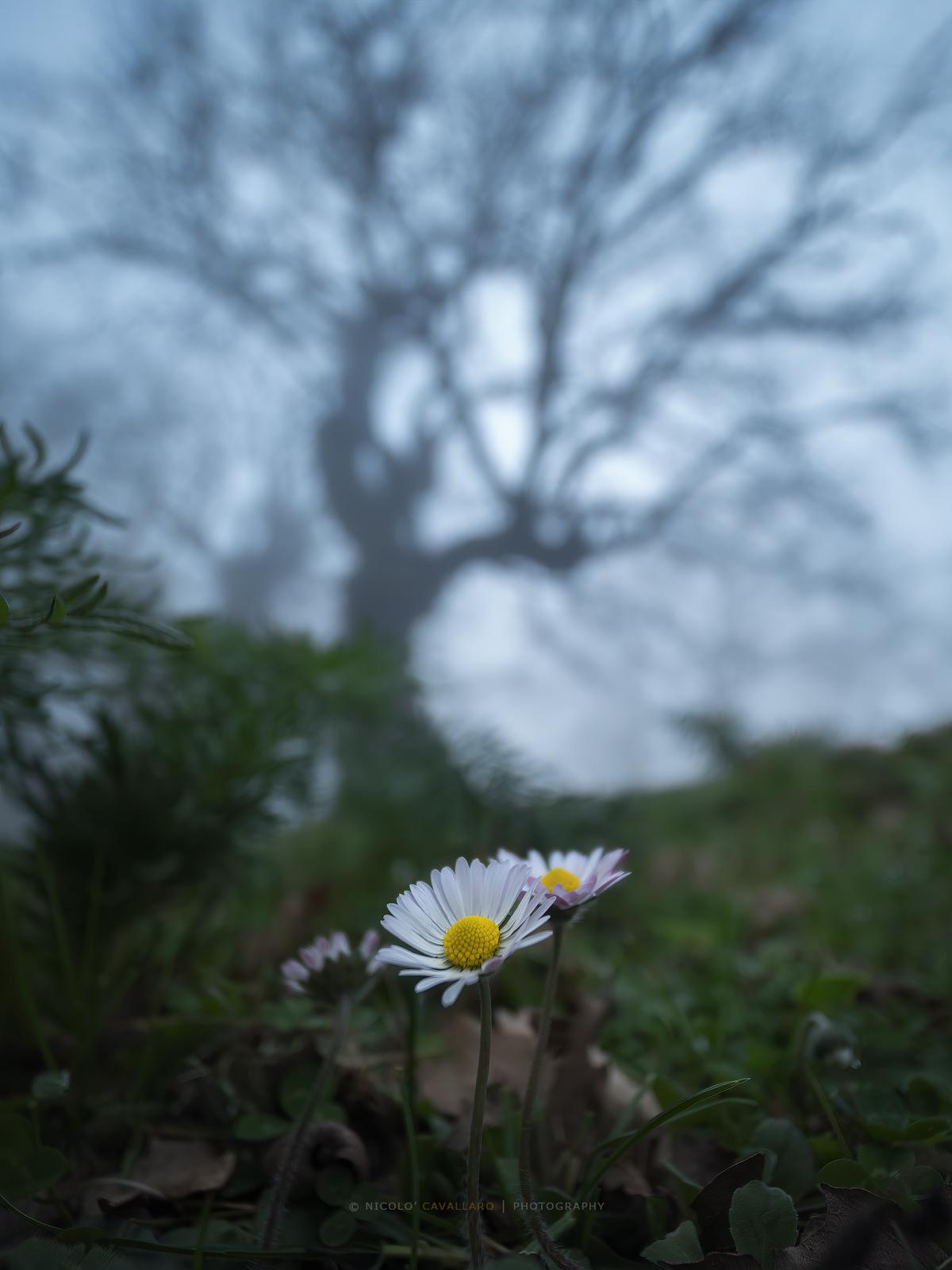 The Fairy Woods...
