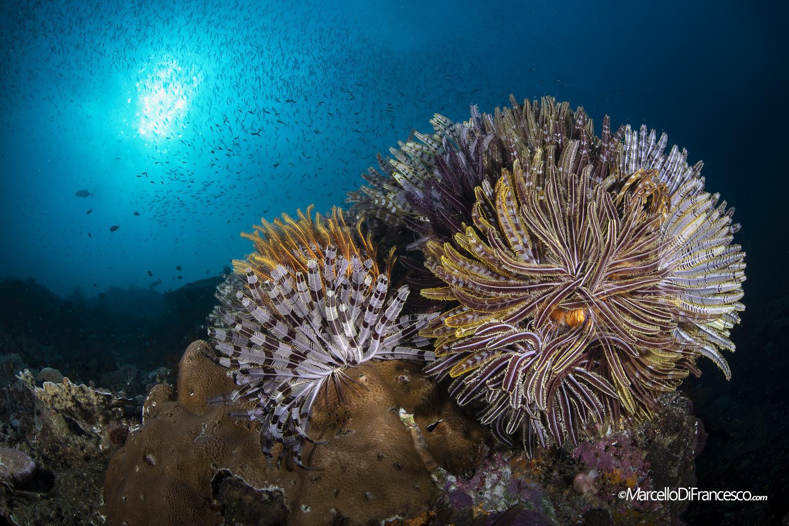 Momon Reefscapes...