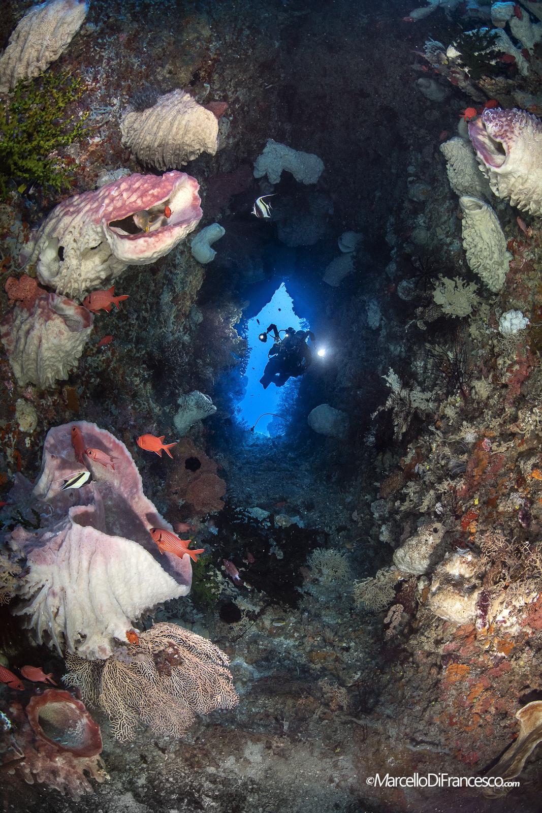 Papuan Reefscapes Passage...