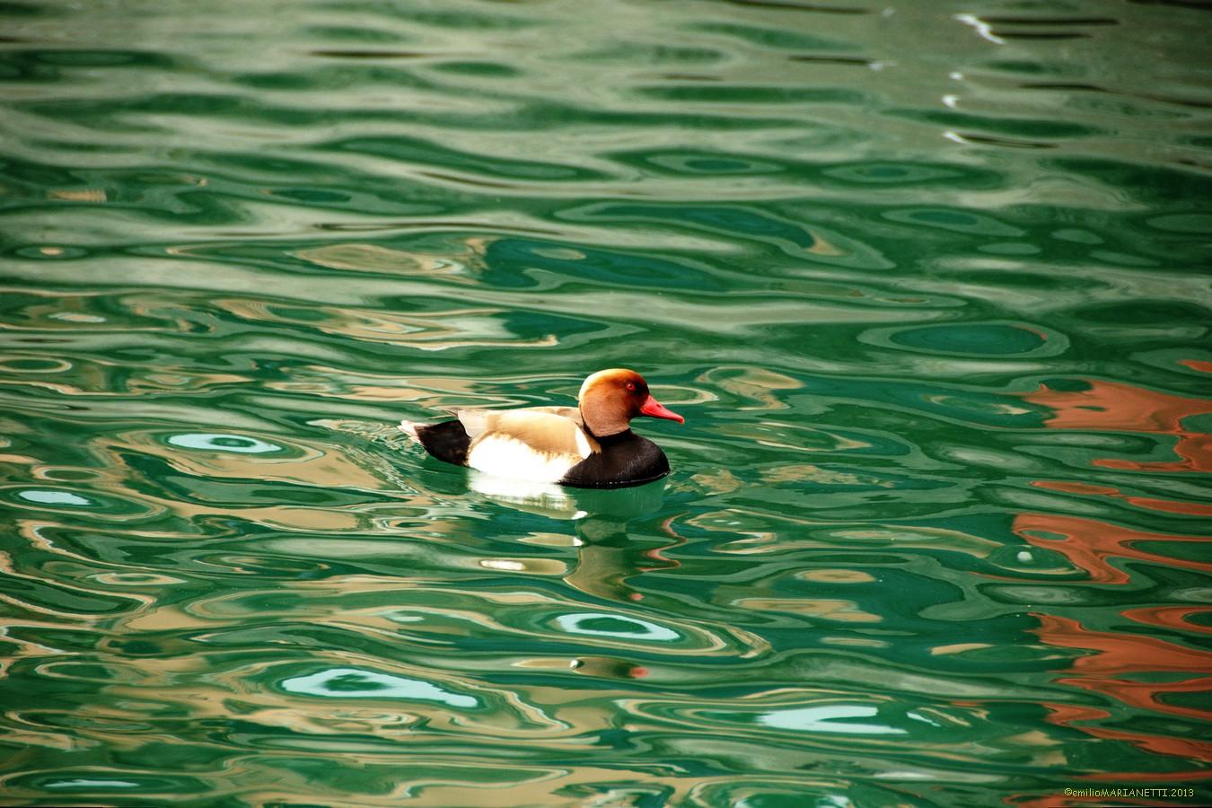 Fistione-Lake Garda...