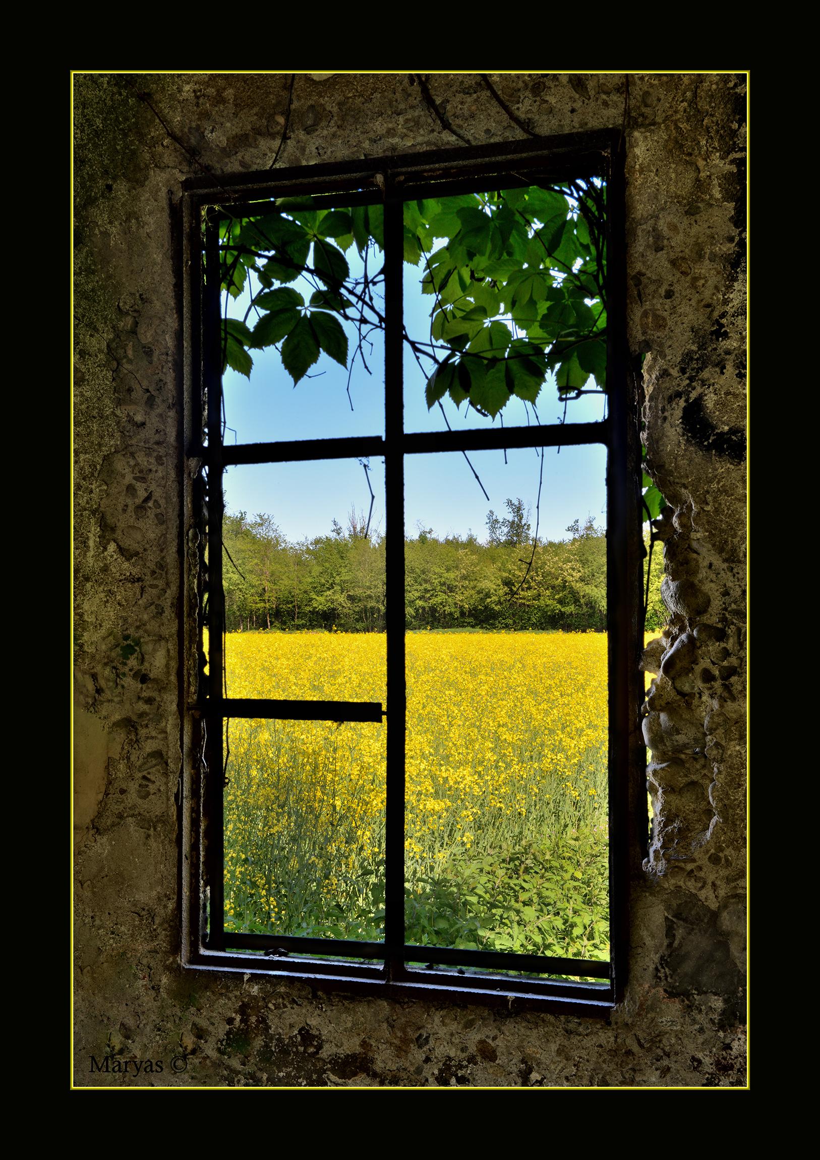 Vecchia finestra...