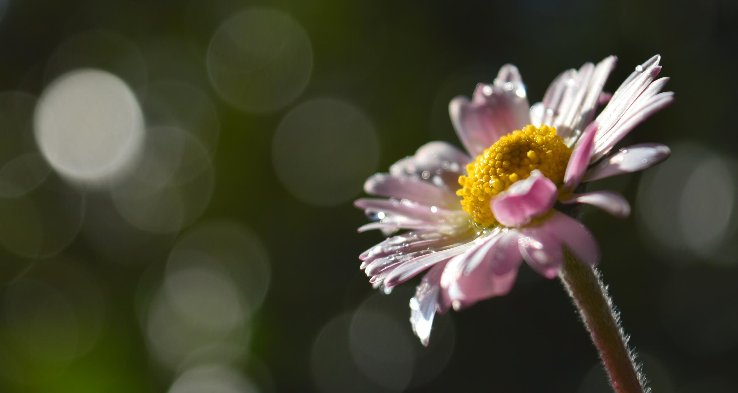 Daisy N. 2...