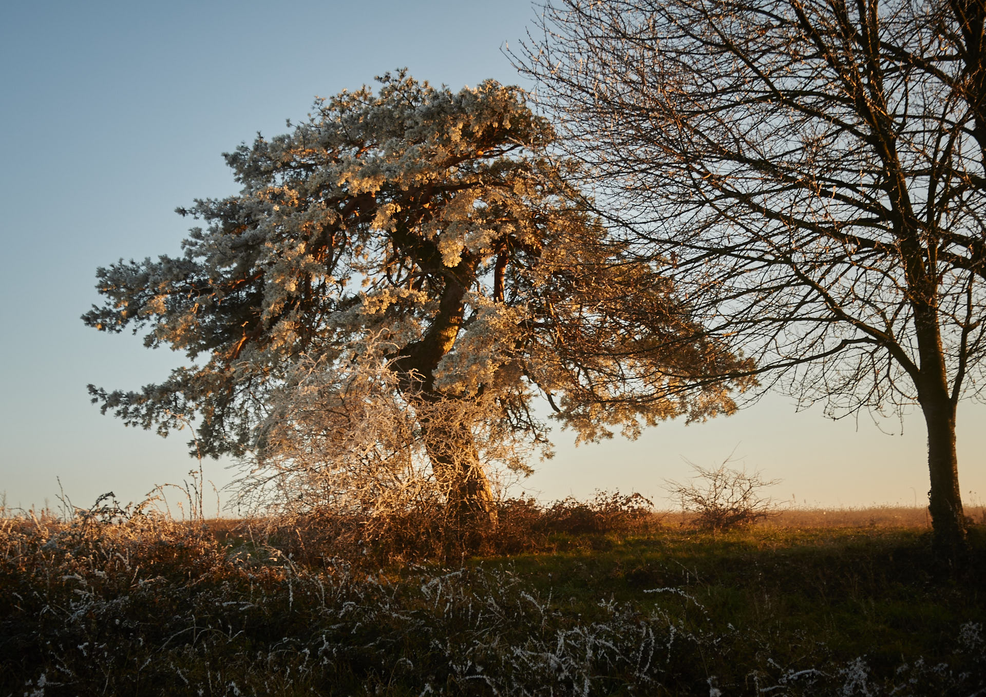 Tree on Saint Launt...