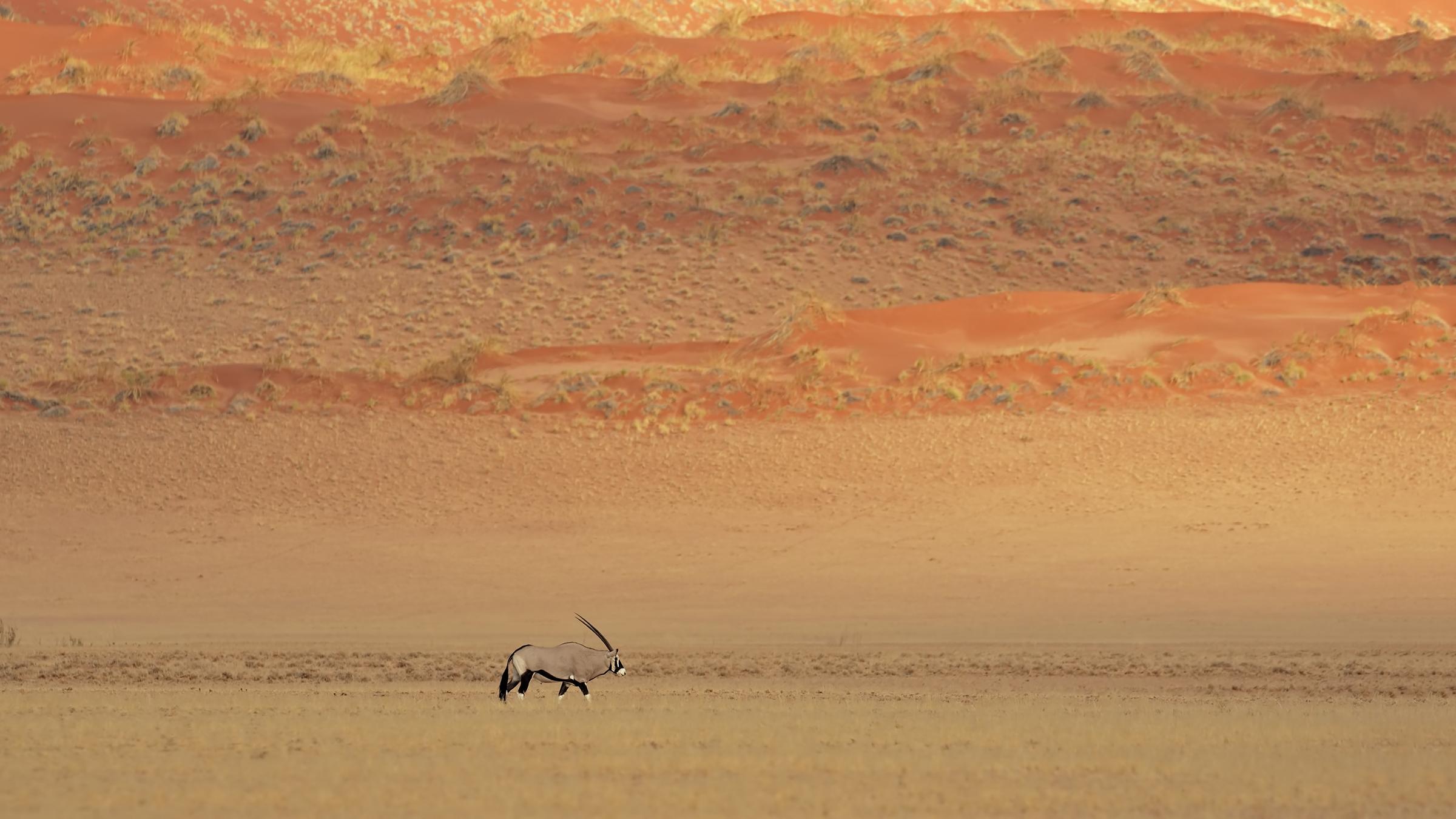 Namib...