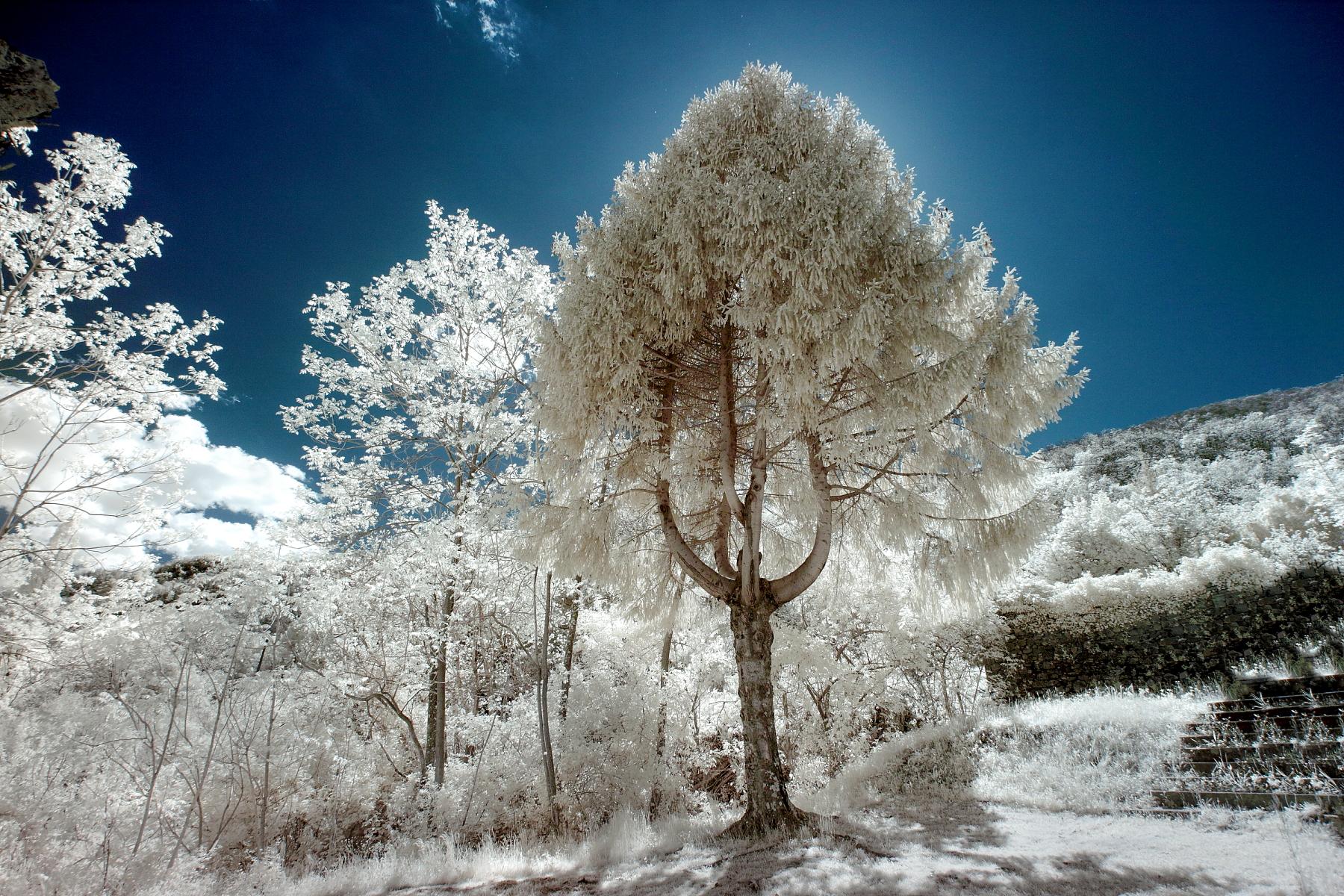 IR Tree...